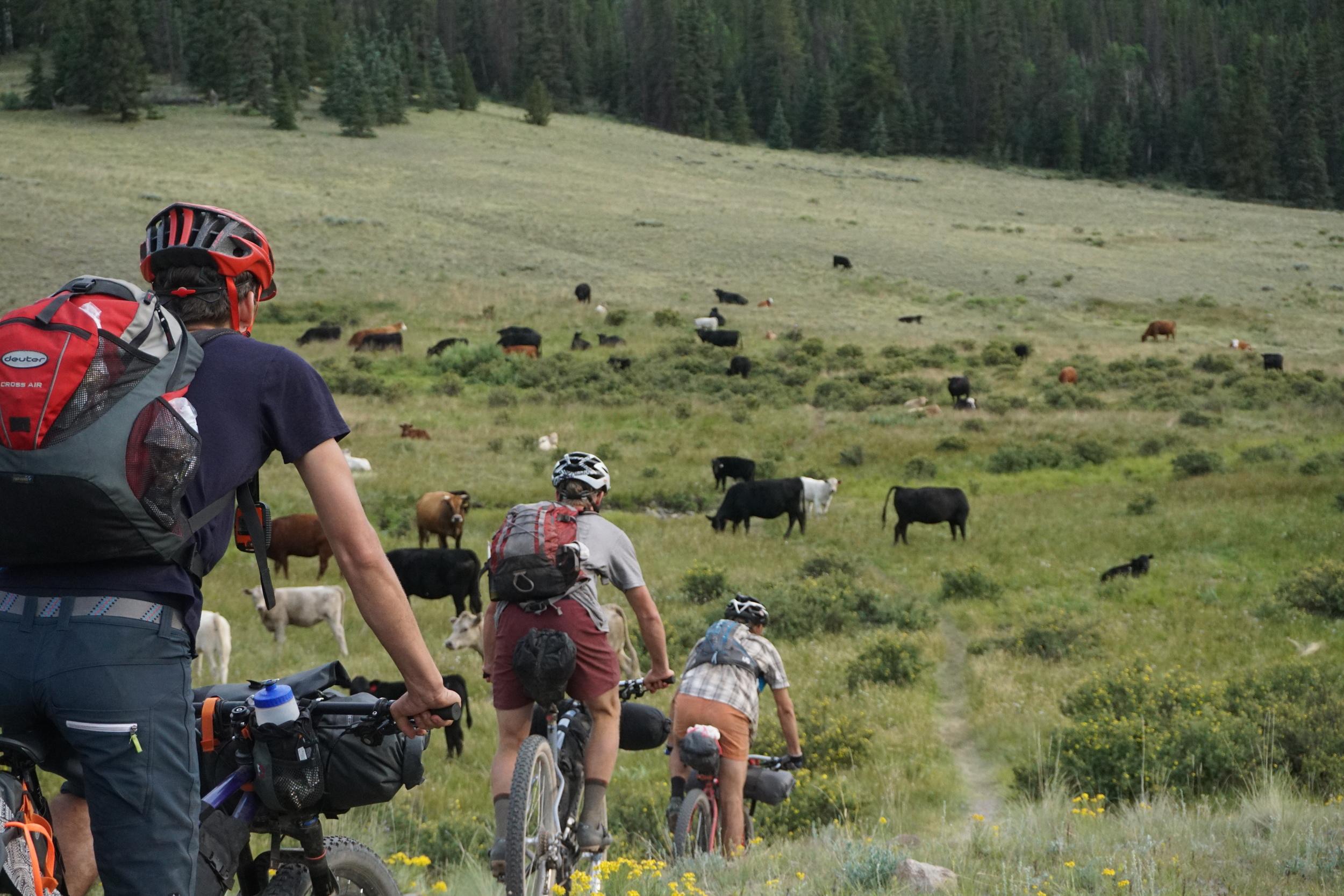Sklar Colorado Trail (178).JPG