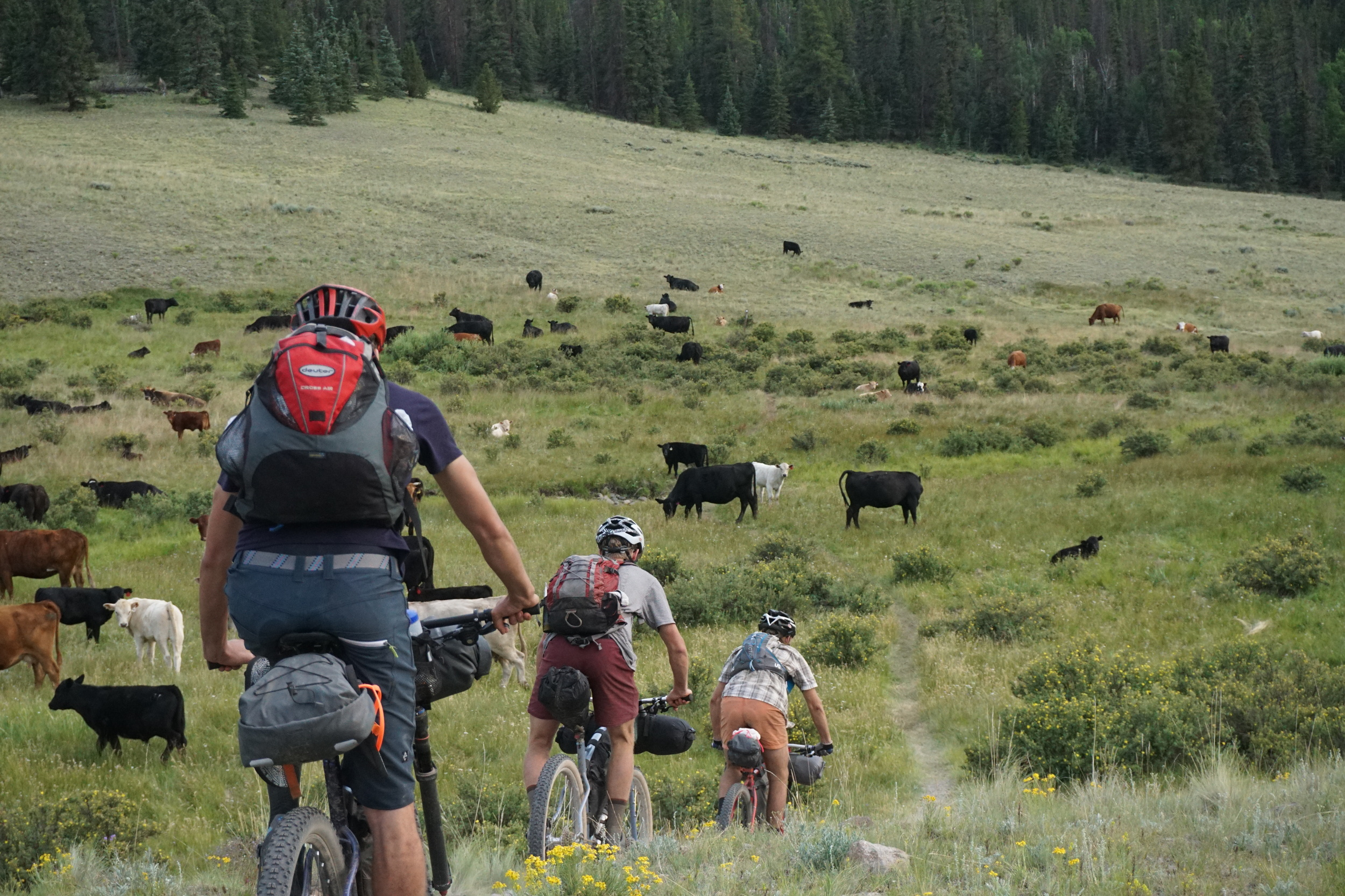 Sklar Colorado Trail (181).JPG