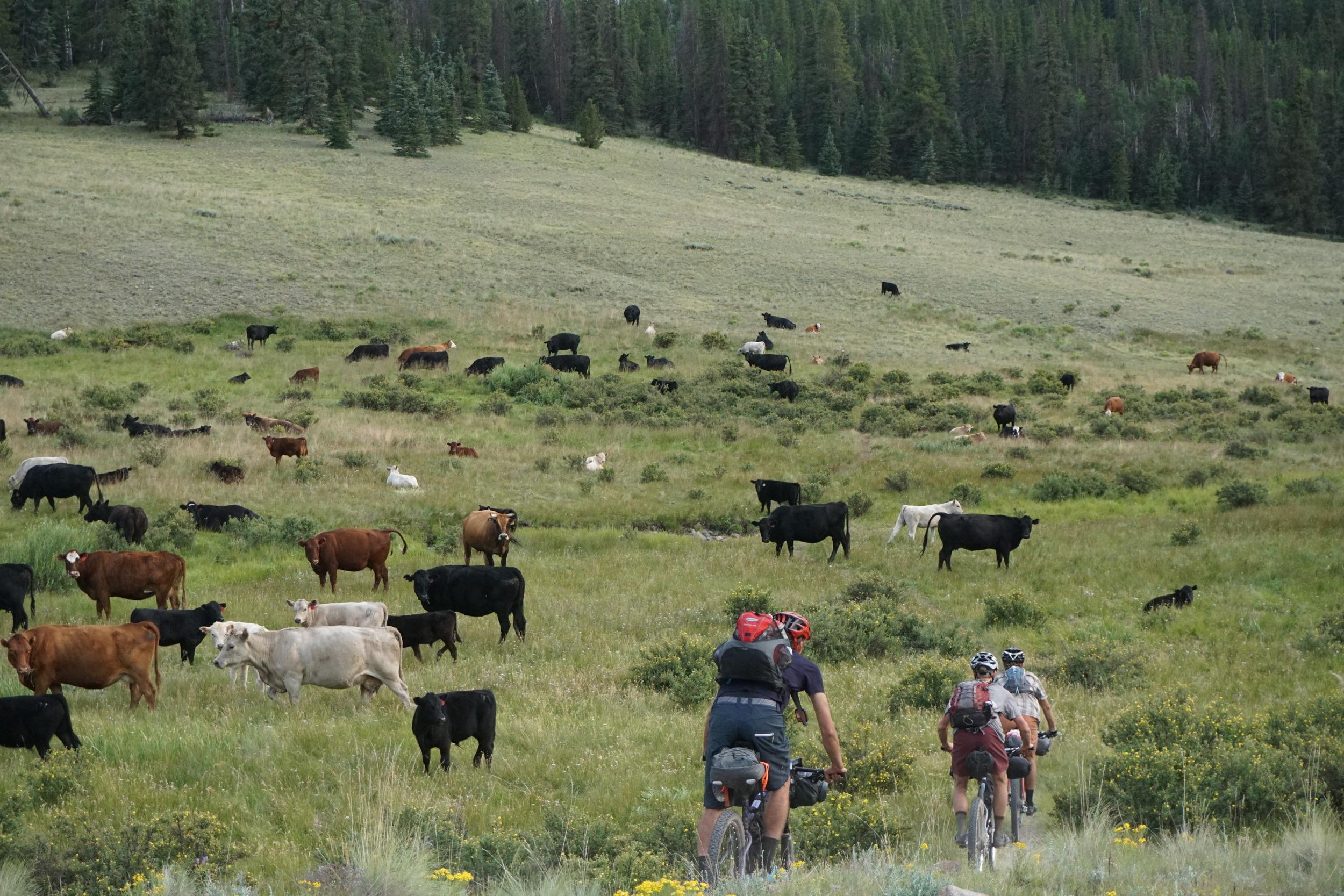 Sklar Colorado Trail (191).JPG