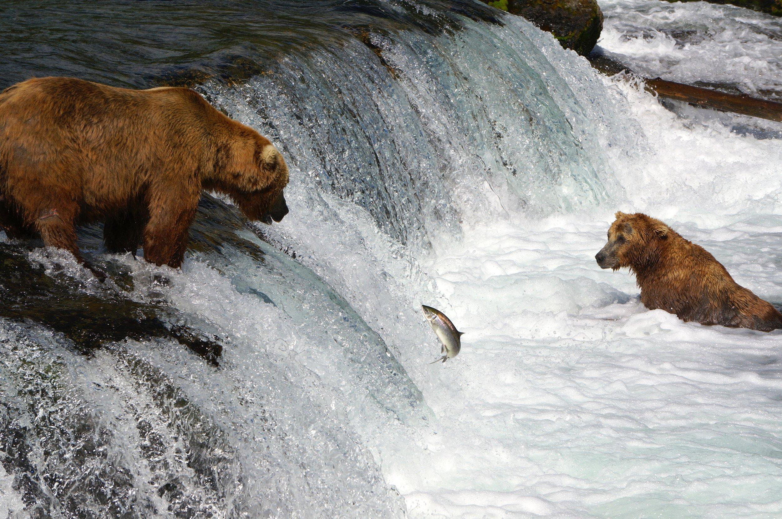 Brooks Falls, Alaska