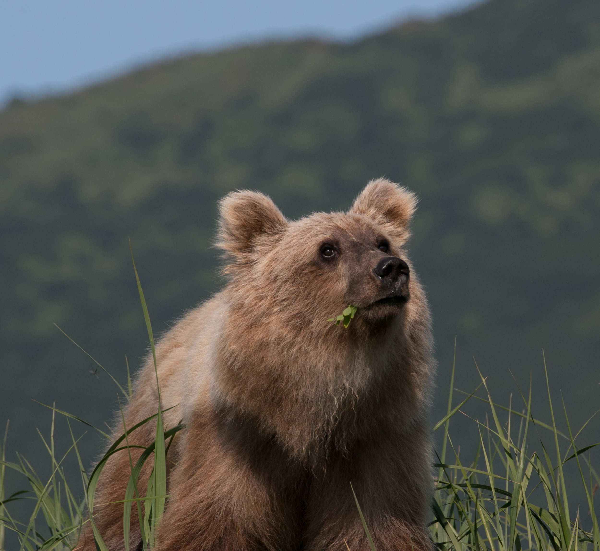 PORTRAIT POSE-MALE GRIZZLY