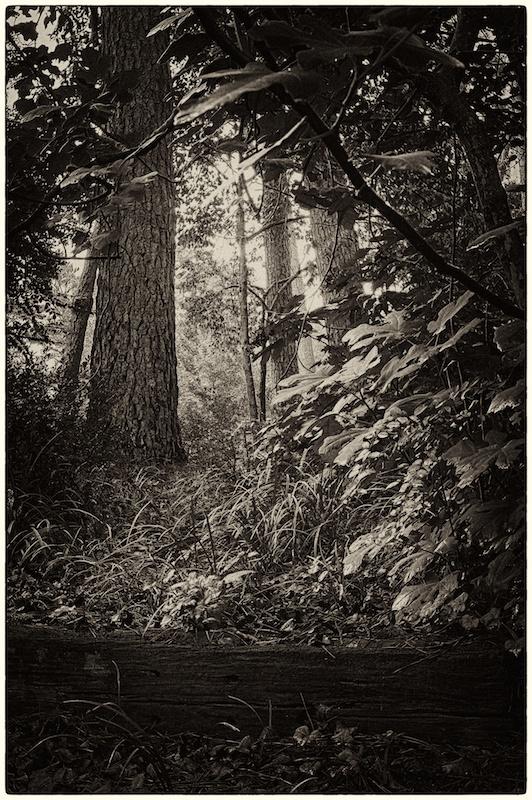 Wild forest awaits me...