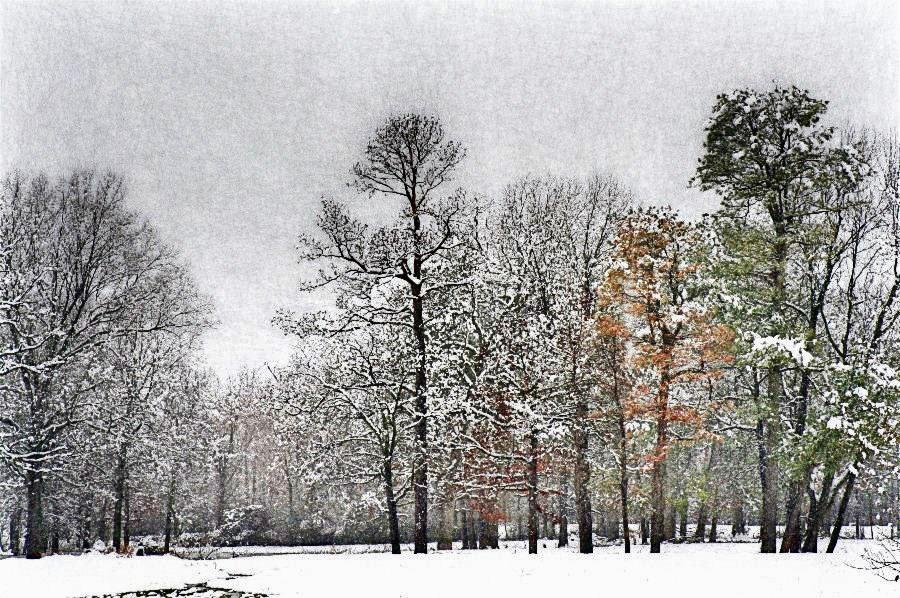 Winter in Hope