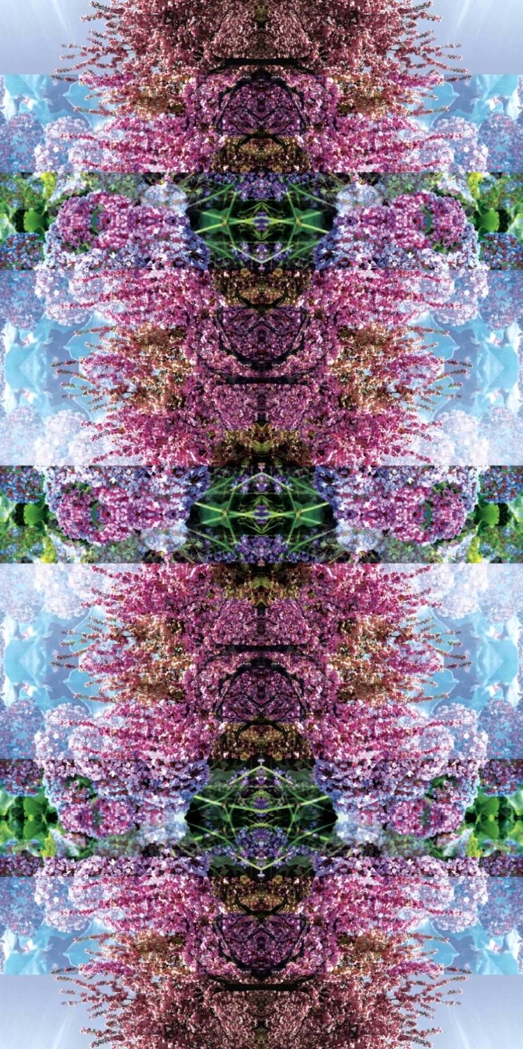 White, Blossoms #12, C Print, 20_x40_, 09_26_2015, $1200 resized (1).jpg