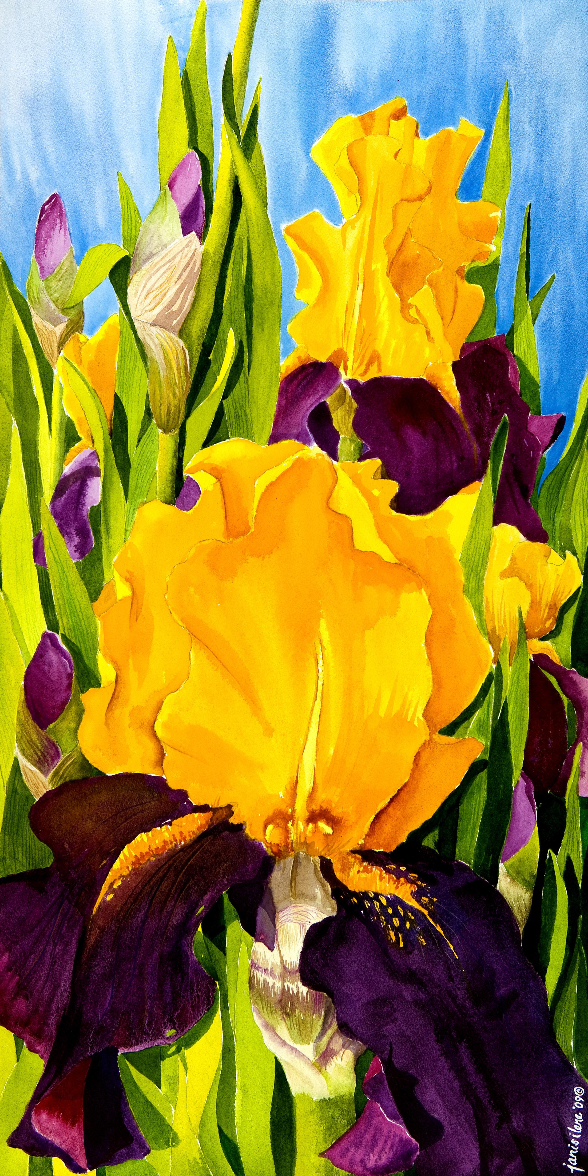 """""""Supreme Sultan Iris"""" by Janis Grau"""