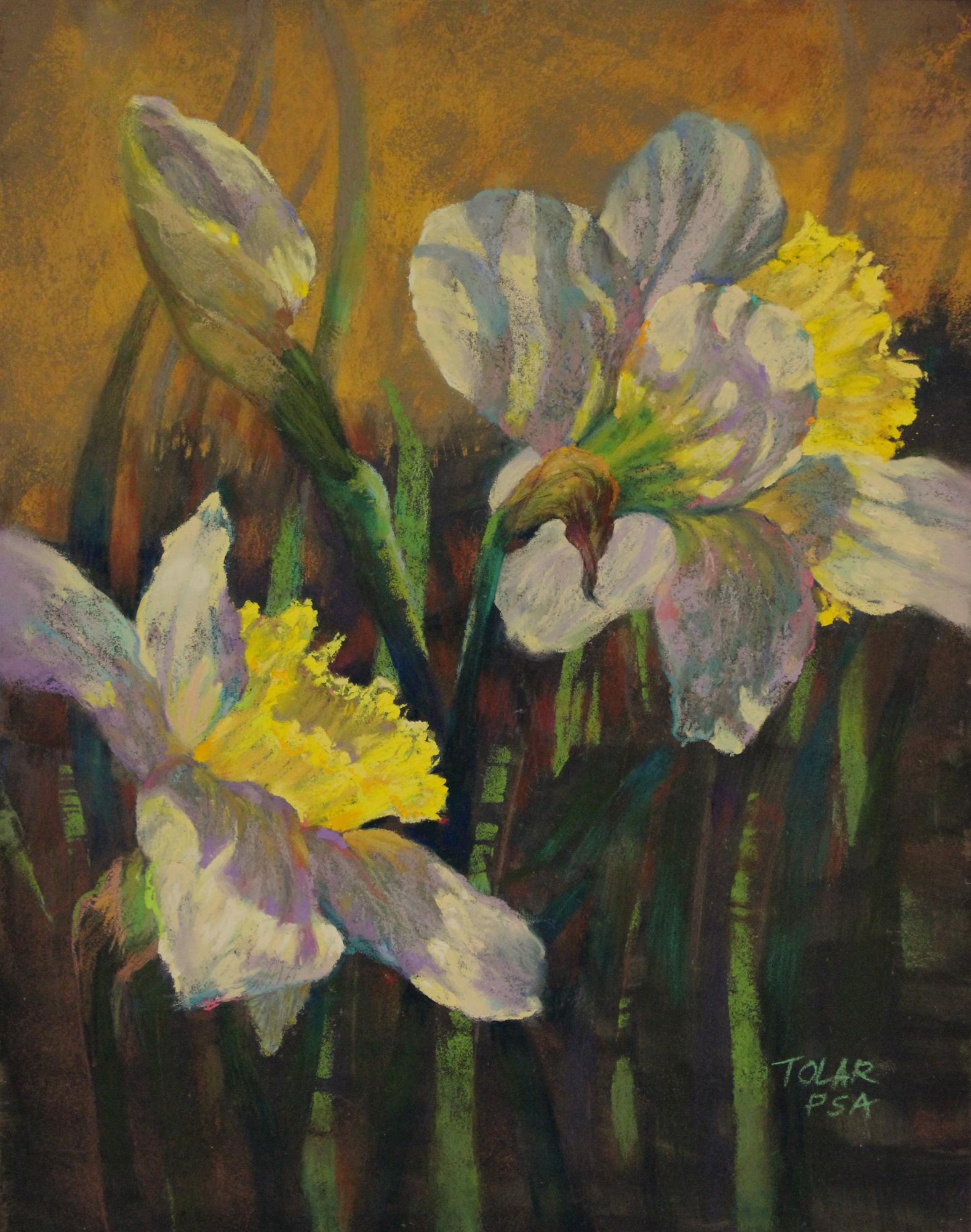 """Backlit Daffodils"" by Jude Tolar"