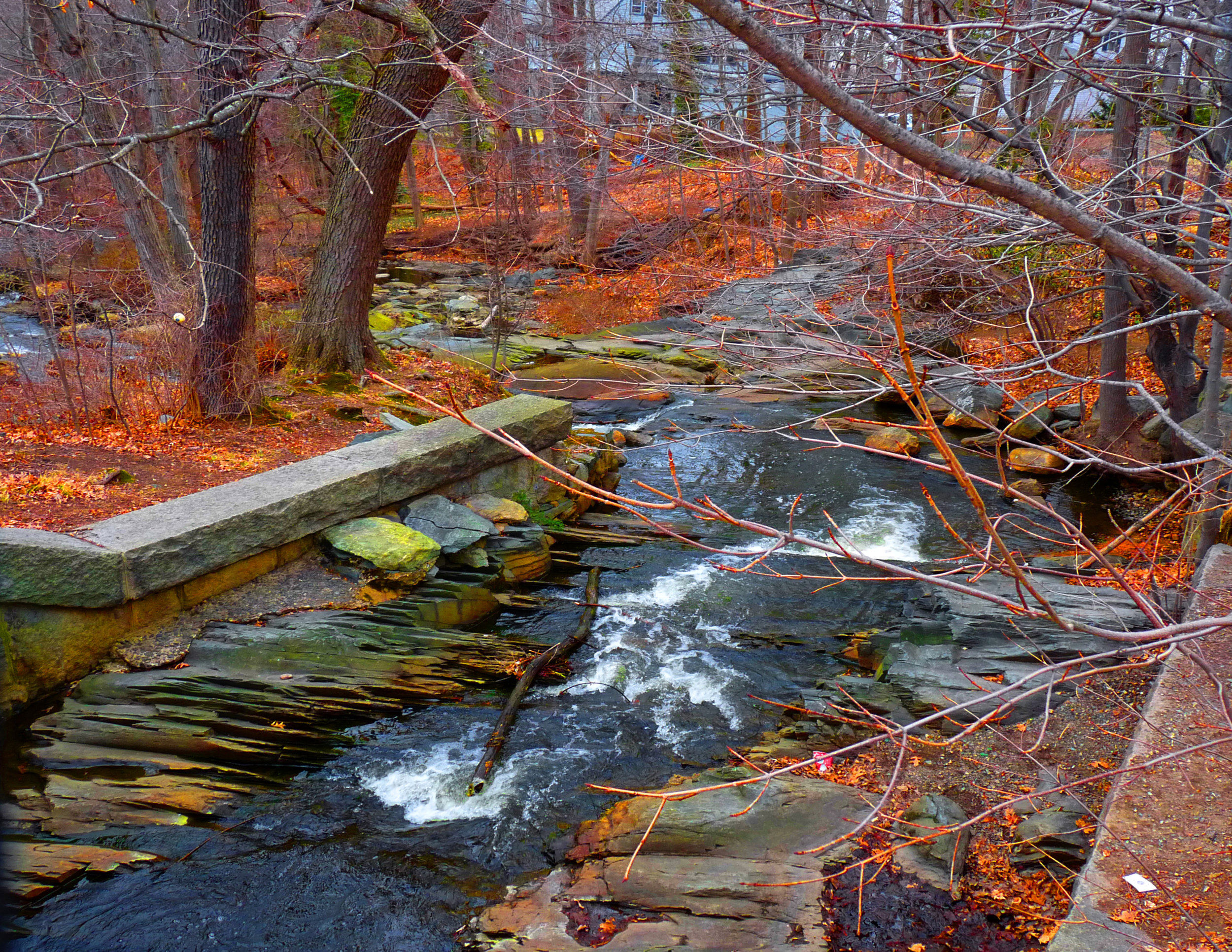 """""""Autumn Stream"""" by Marcia Berg Haskell"""