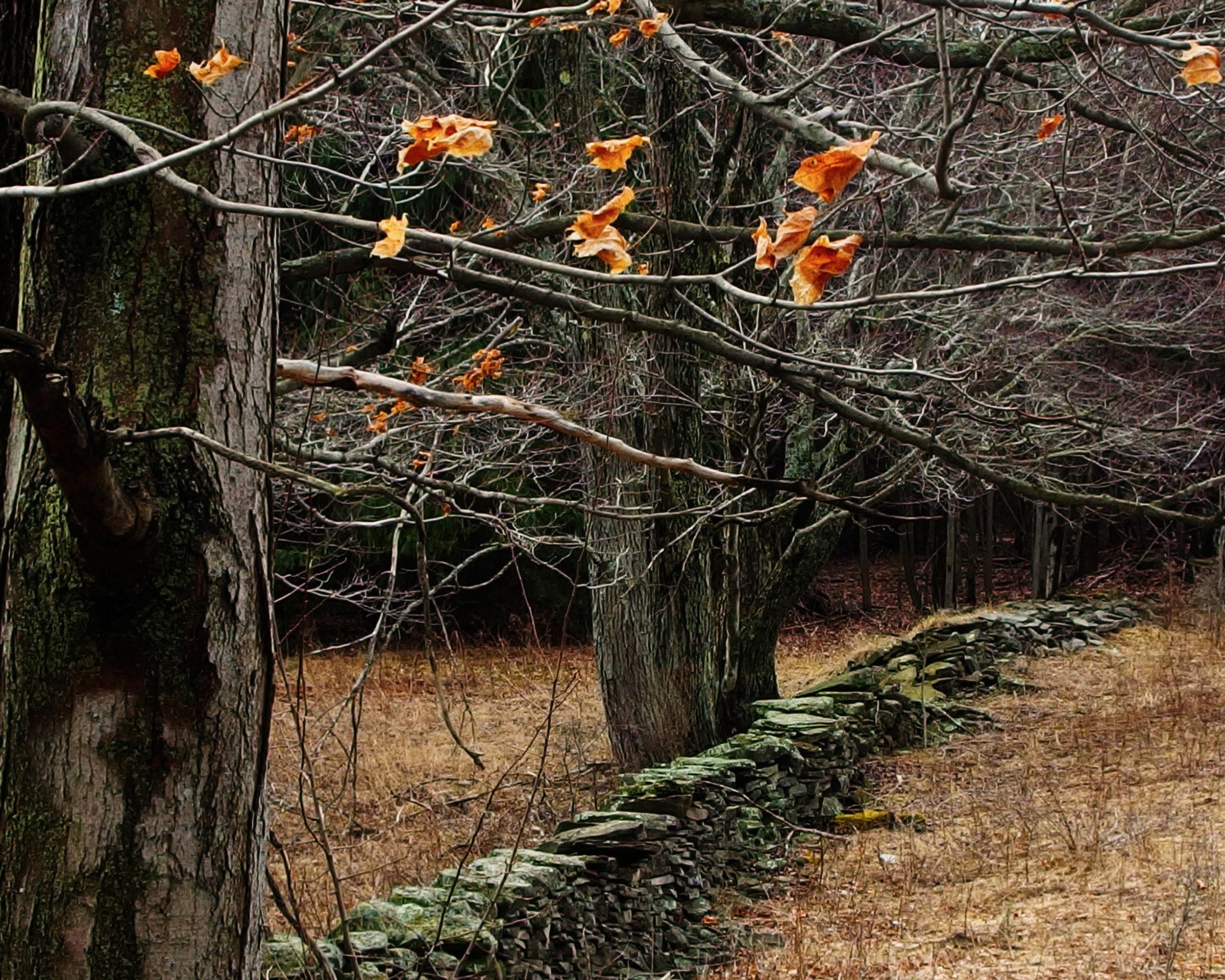 """Stone Wall"" Linda Austin"