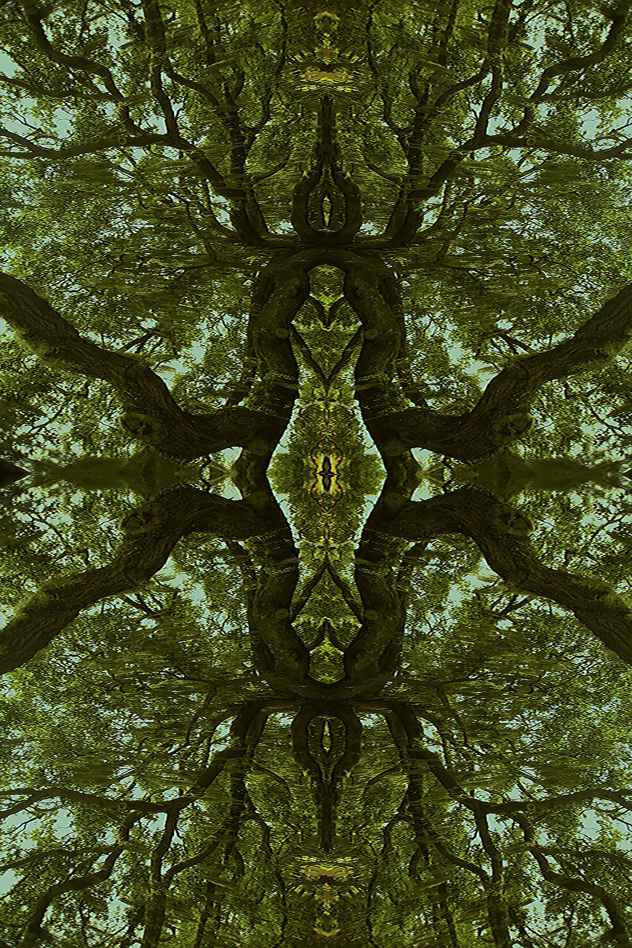 20496926-Kaleidoscope Oak.jpg