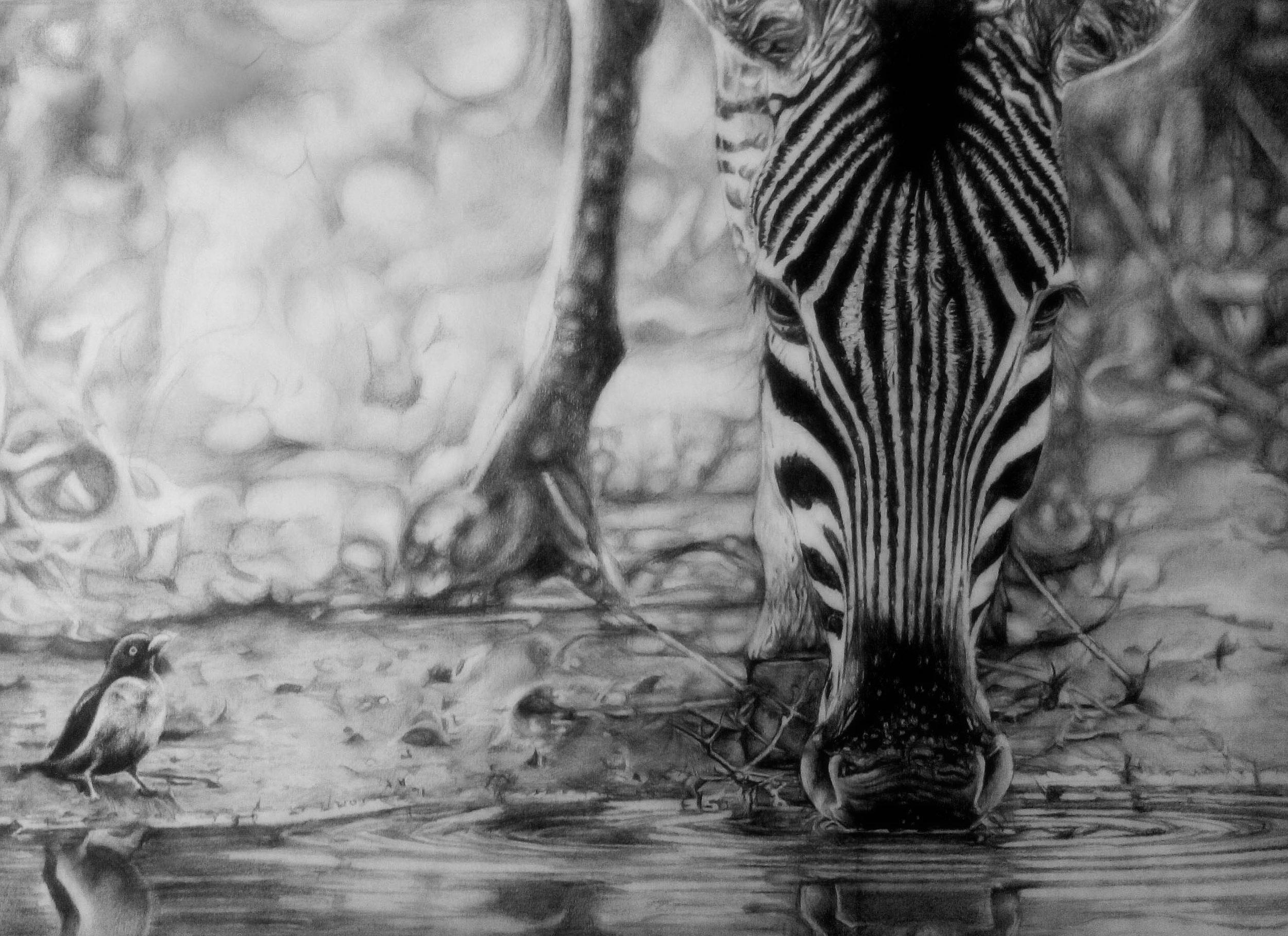 20496930-zebra 60X40cm.jpg