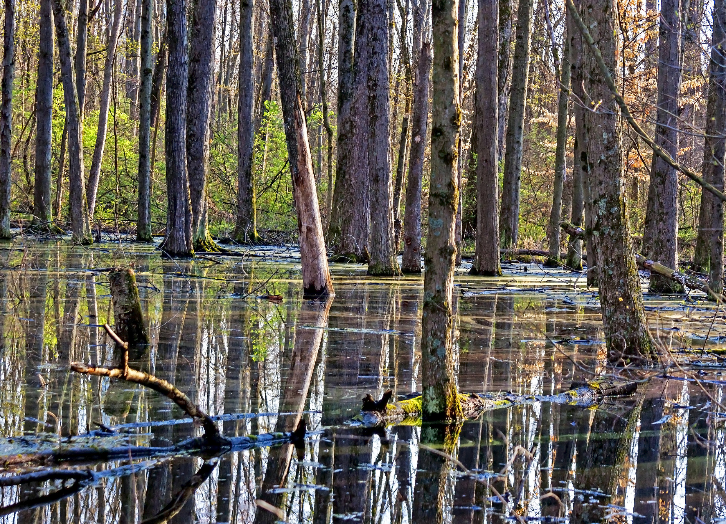 20496922-Reflection on the Vernal Pool.jpg