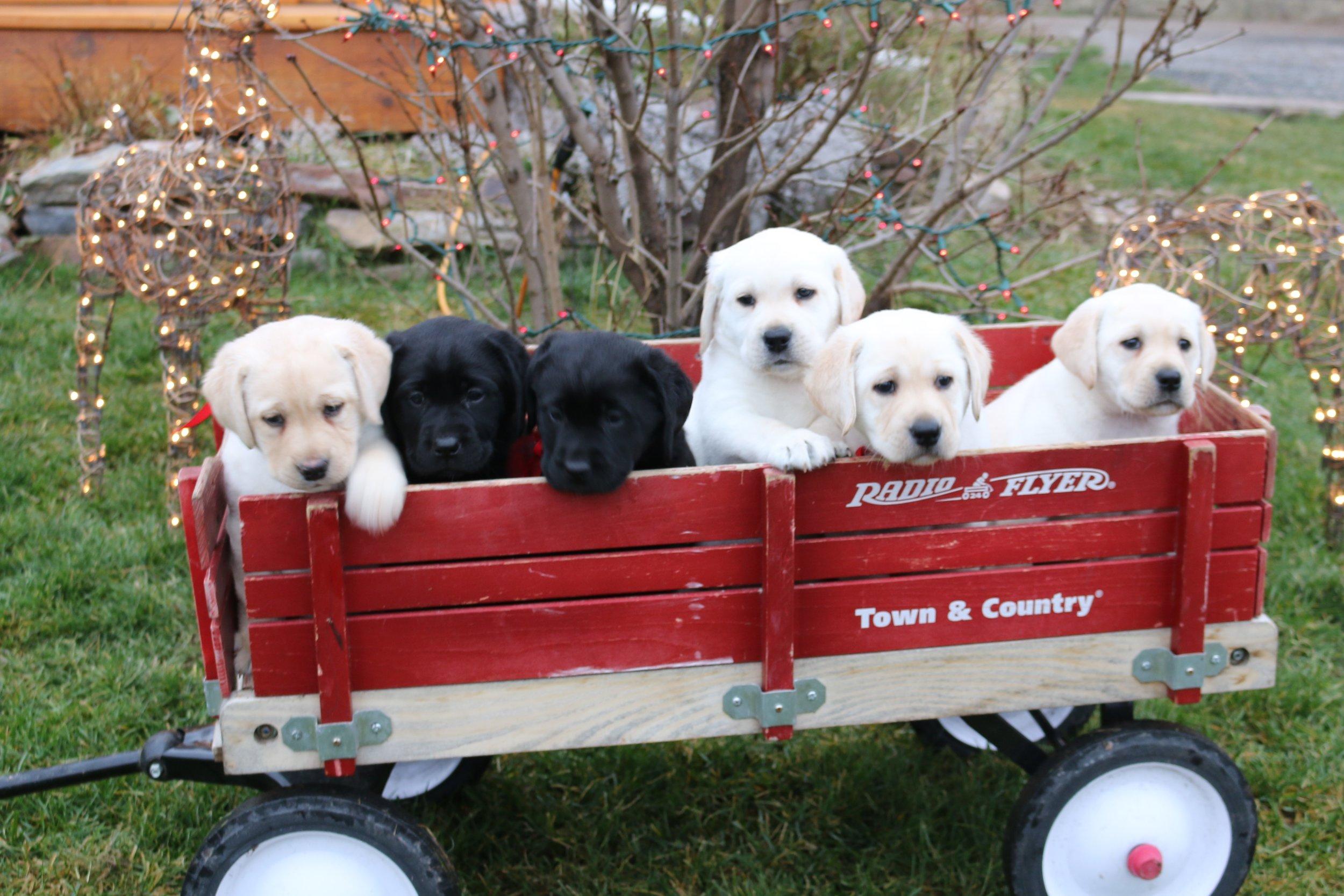 Kids, Buffalo, Hawk's pups, fall pic_6810.JPG