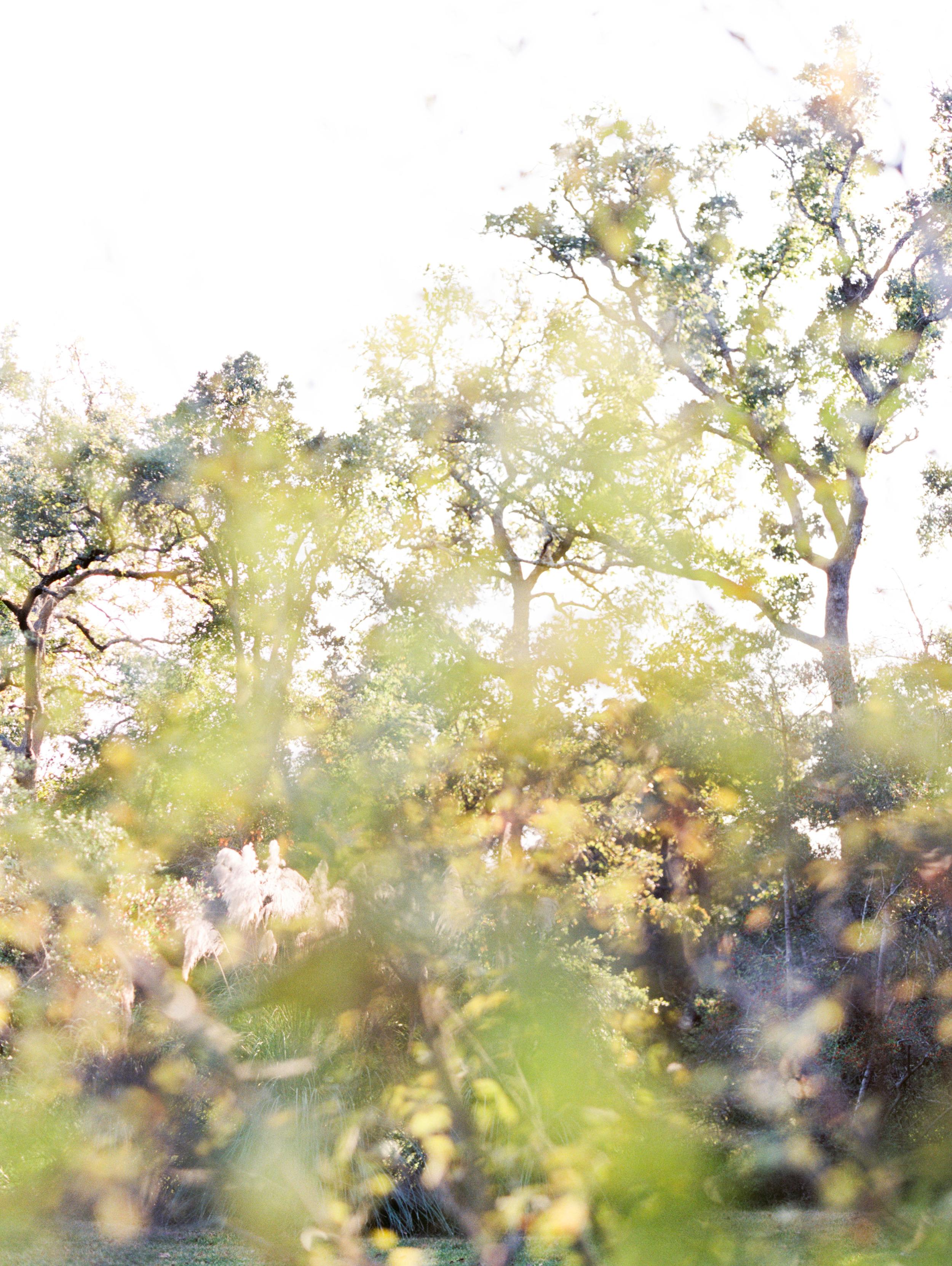Sarah Best Photography - Elizabeth's Bridals - 7F Lodge-103.jpg