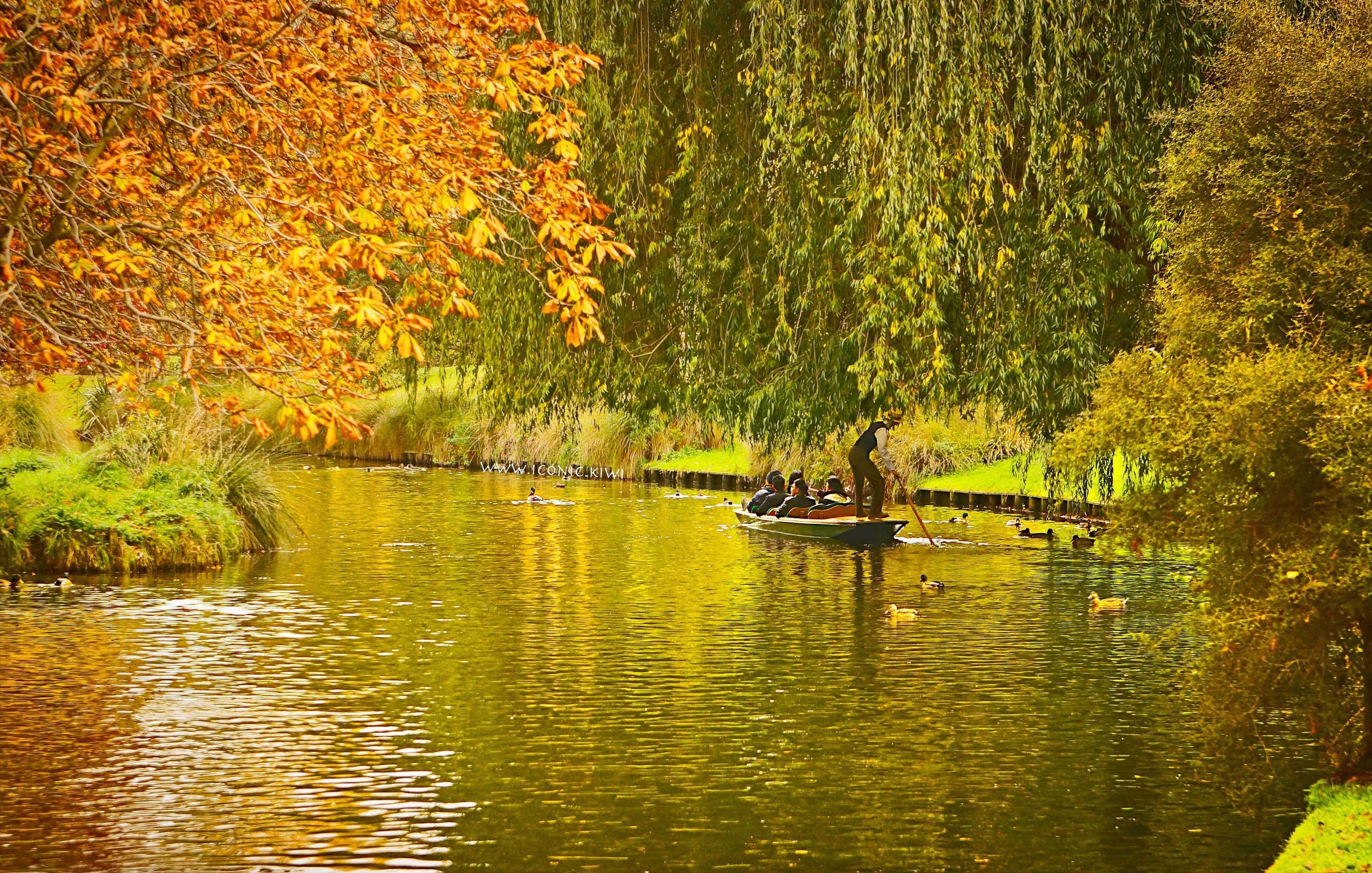 Autumn day on the river, Christchurch, New Zealand