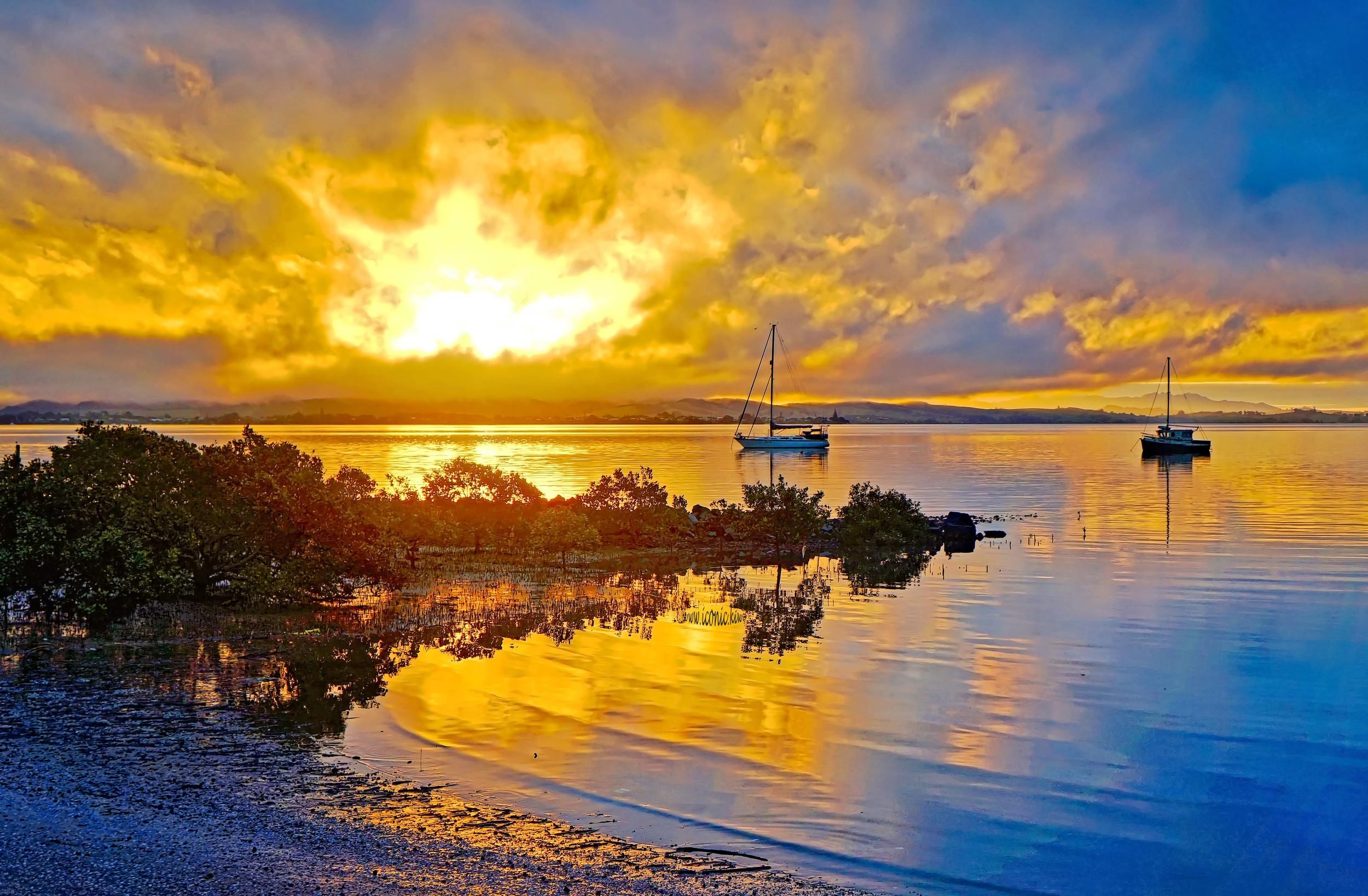 Mangroves reflected at sunset, Northland, New Zealand