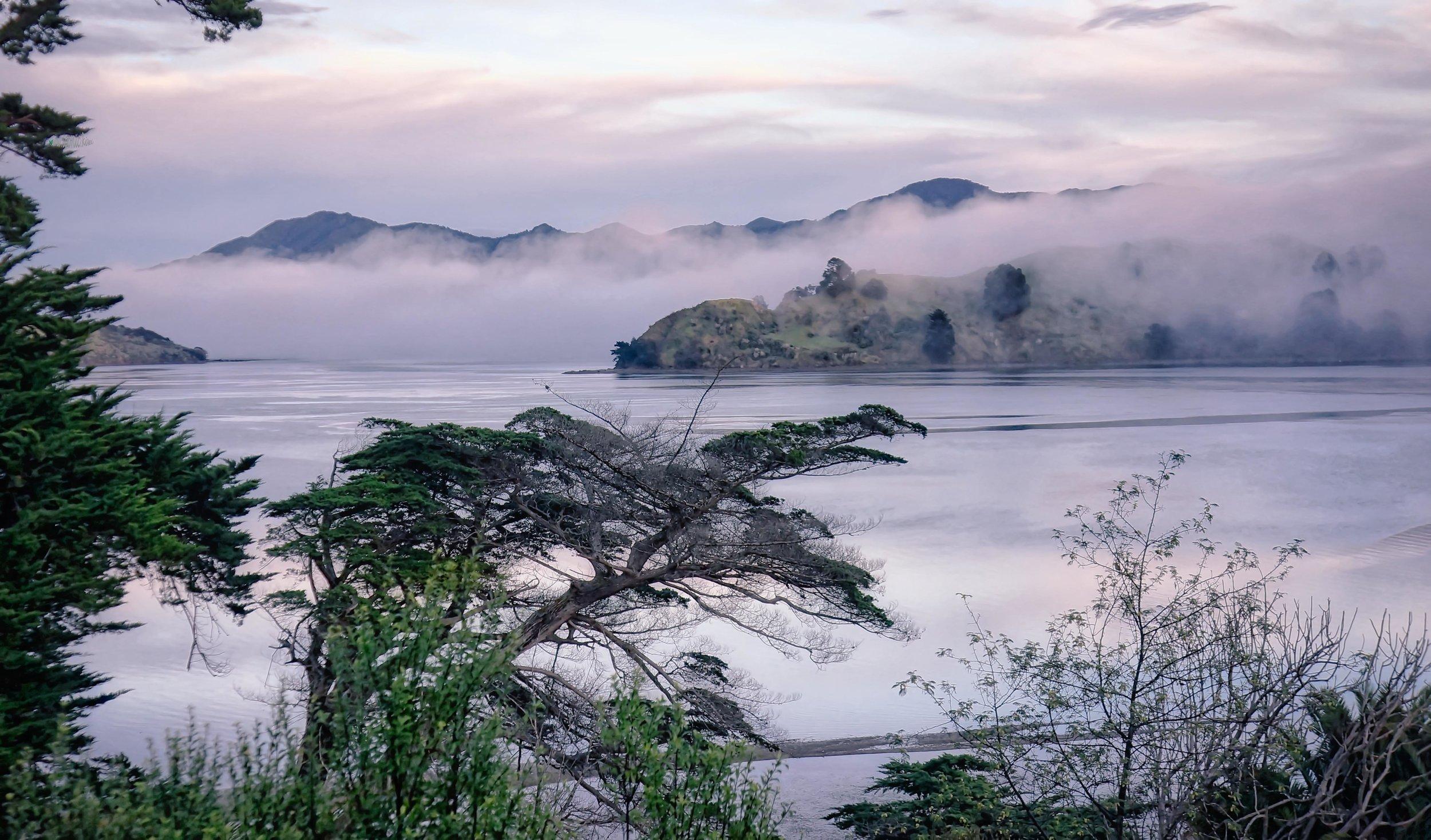Misty dawn in the Hokianga