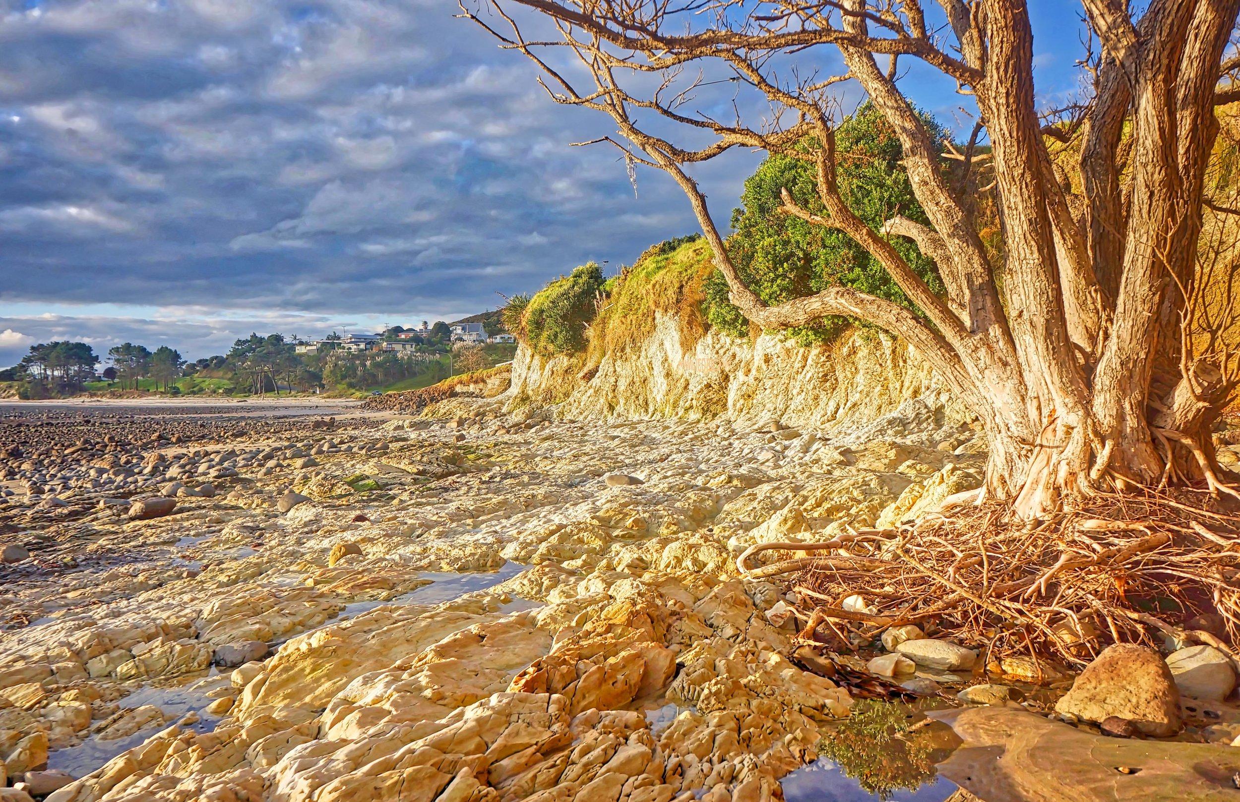 Evening beach walk at low tide, Hokianga, Northland, New Zealand