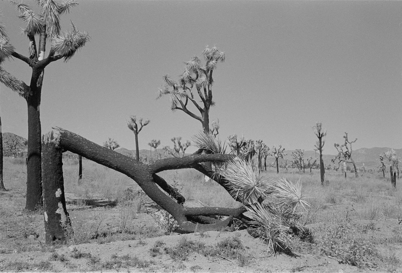Joshua Tree National Forest.jpg
