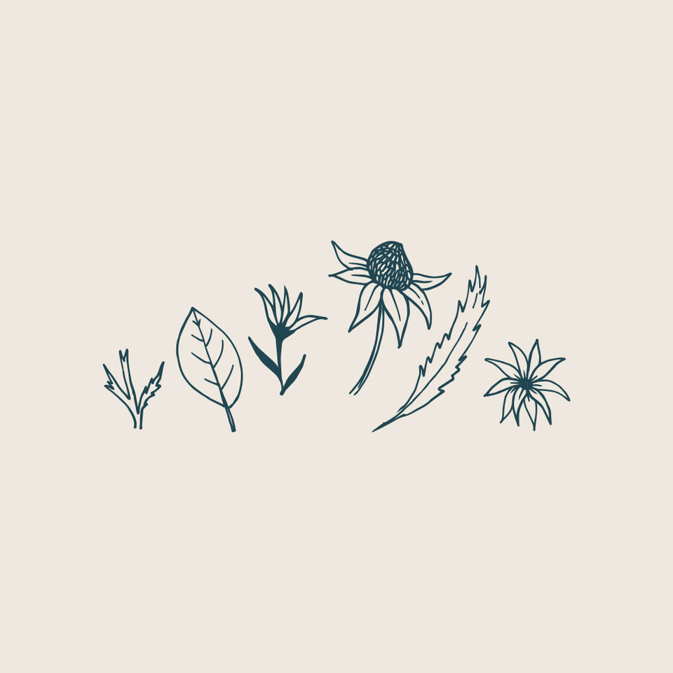 The Little Flower Shop   Set of hand-illustrated florals for The Little Flower Shop's floral foraging workshops. Illustrations included flannel flowers and leaves, waratah and magnolia leaf line drawings.