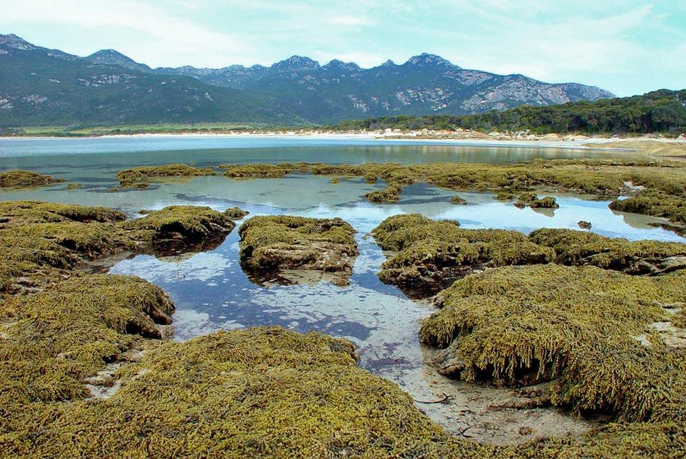 Strzelecki-National-Park---2.jpg