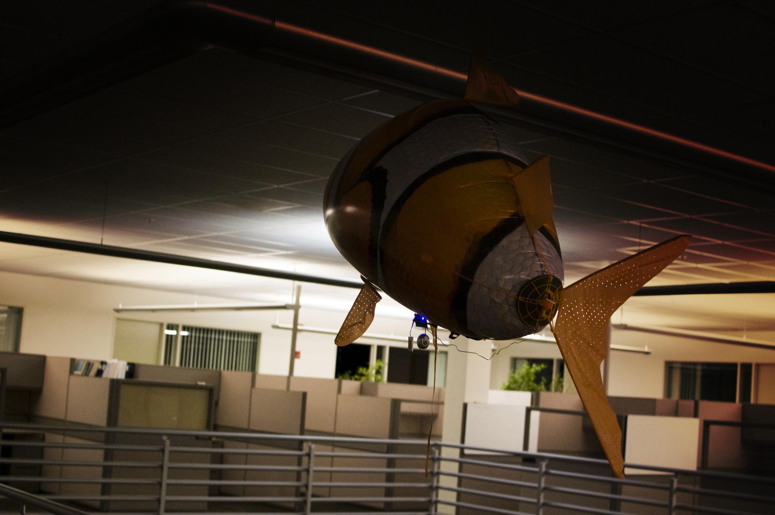 BT songfish explores empty cubicles 2