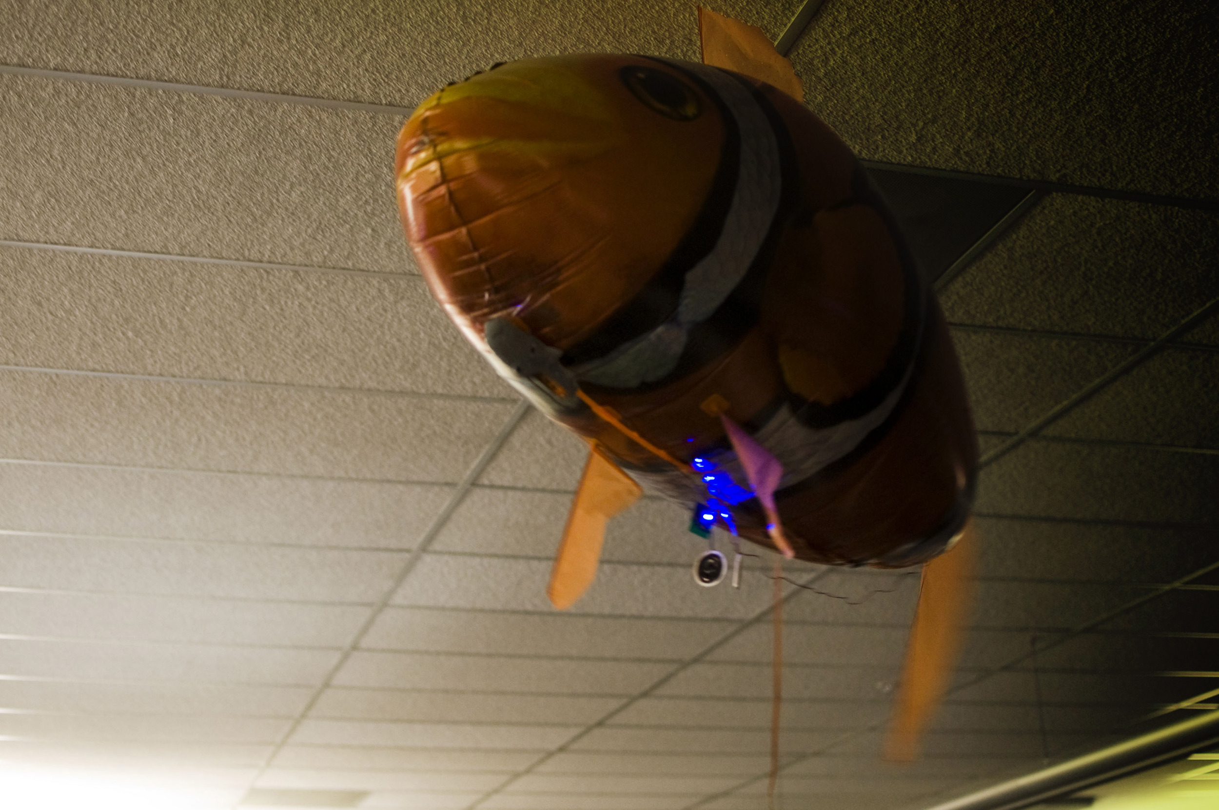 BT songfish explores empty cubicles 1