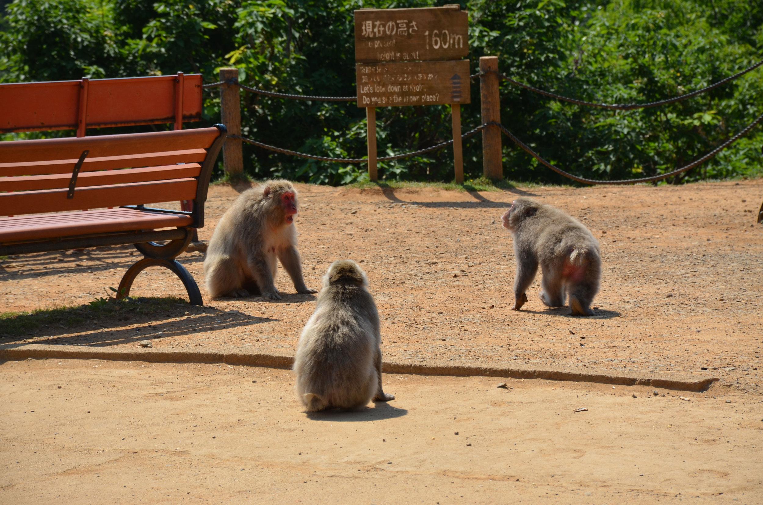 Monkey_Park_Kyoto