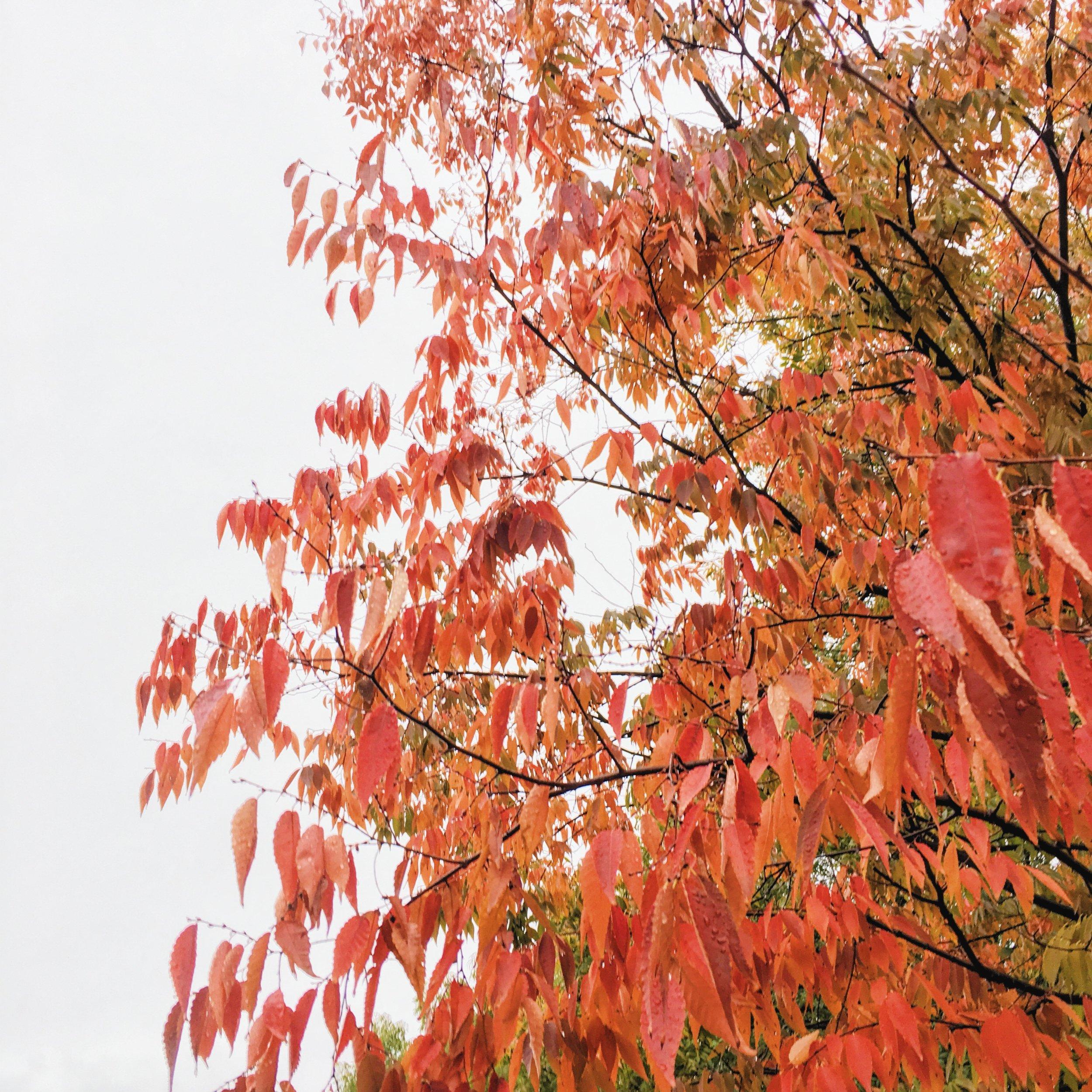 Autumn in Chico Ca