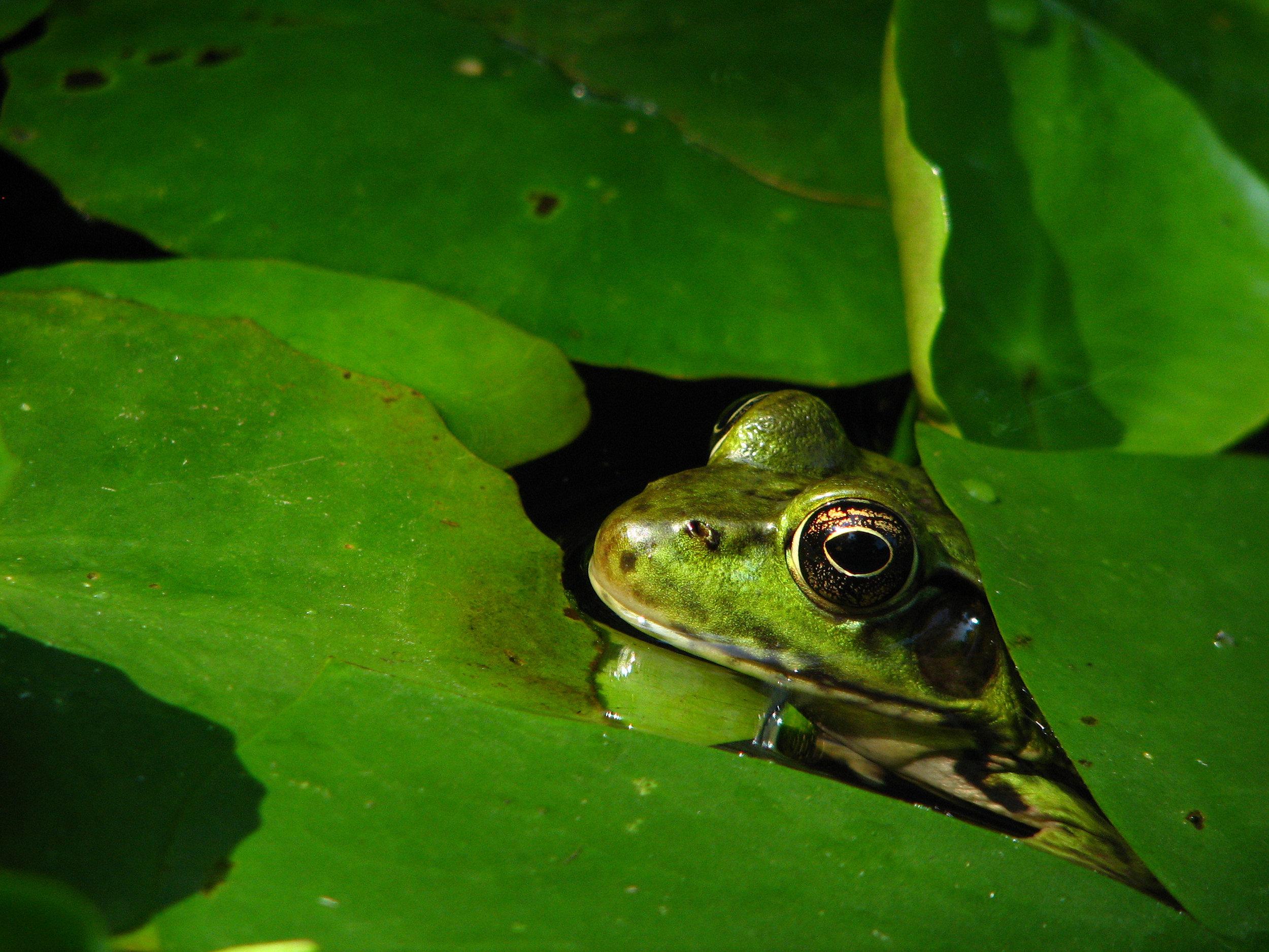 frogs pond 029 copy.jpg