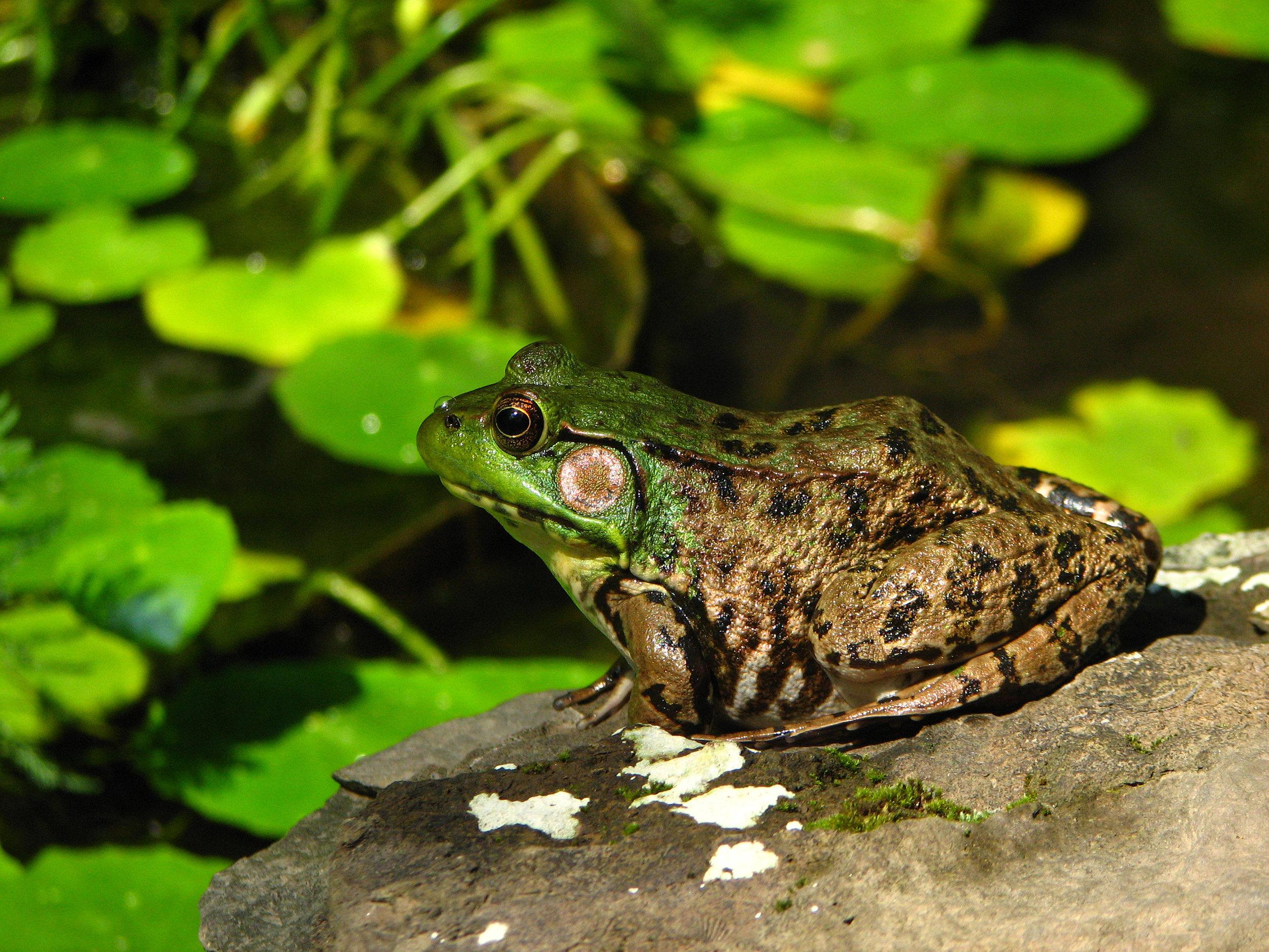 frogs pond 049 copy 2.jpg