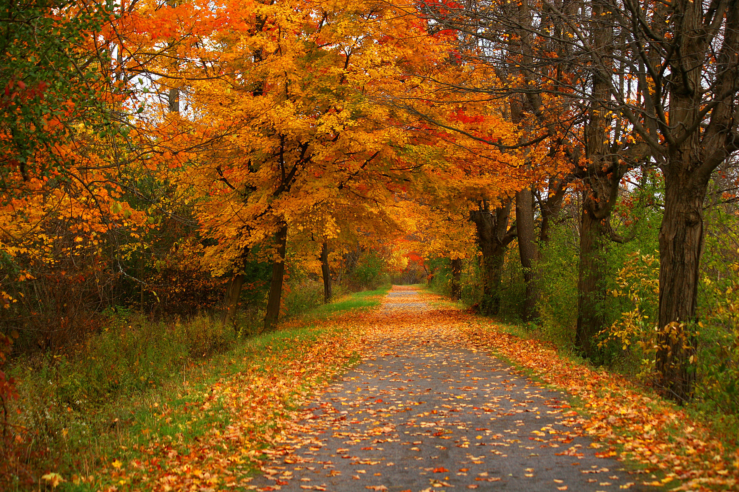 erie+canal+fall+photos+zoom+20-2183505900-O.jpg