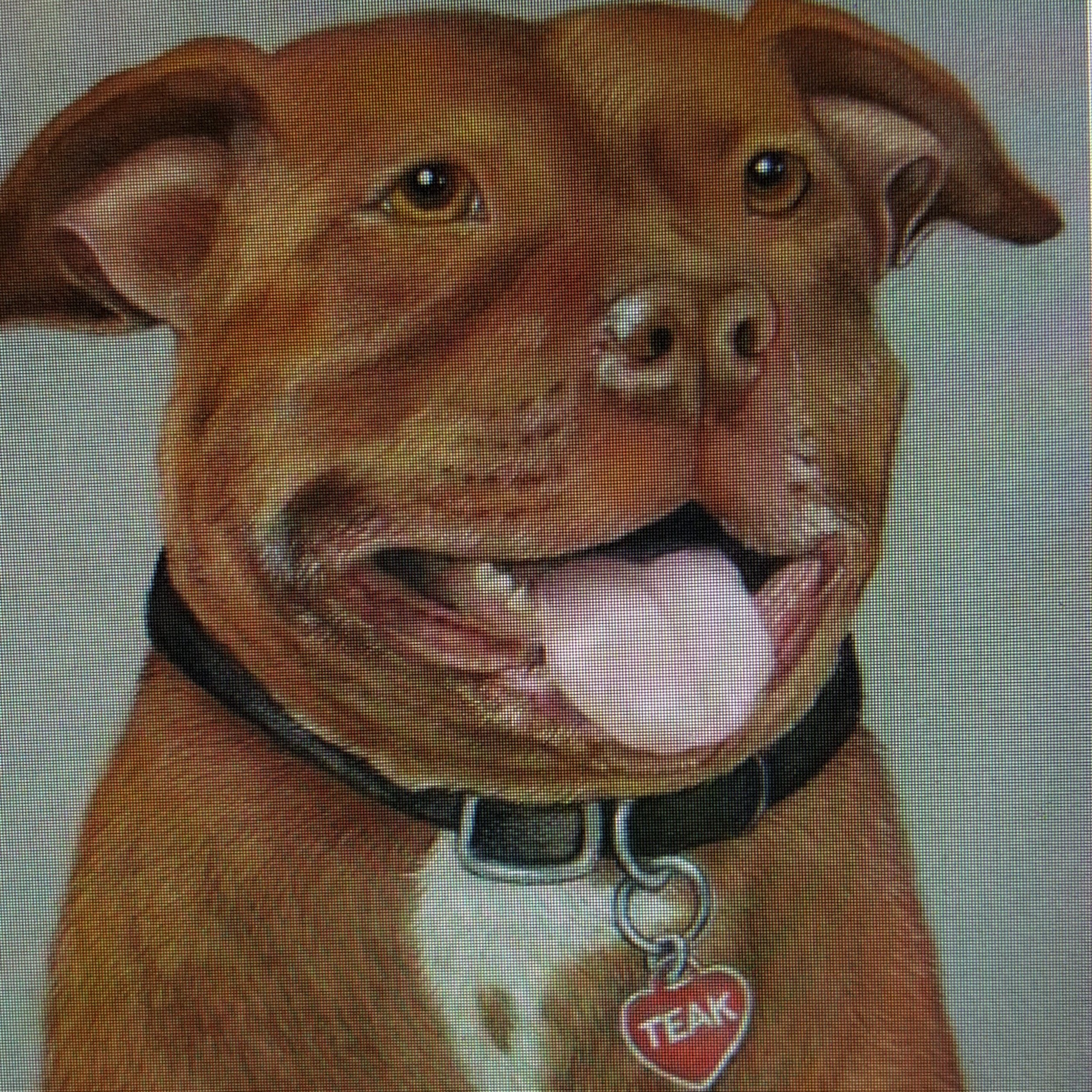 The portrait in pastel.... really enjoyed creating her smile and teeth... this girl a very kind and pretty pittie! -Marlene