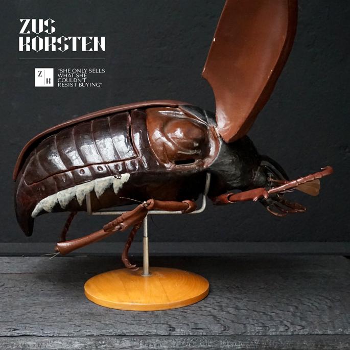 Anatomic-Beetle-07.jpg