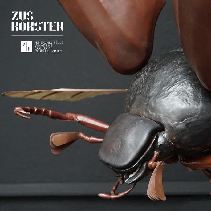 Anatomic-Beetle-08.jpg