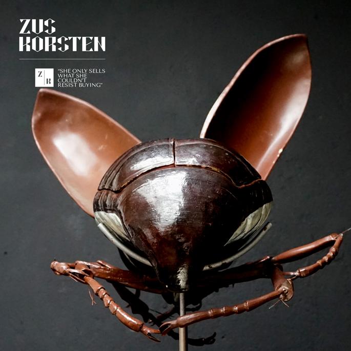 Anatomic-Beetle-14.jpg