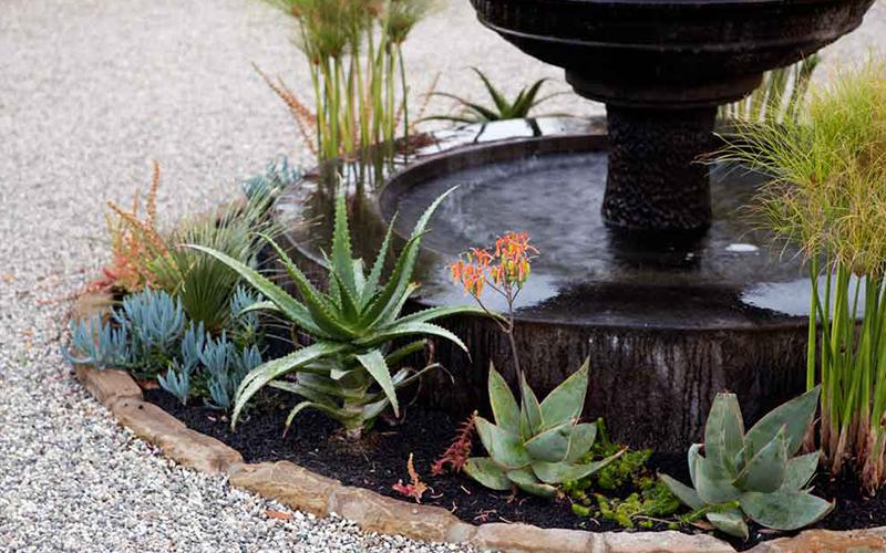 Fountain with Suc.jpg