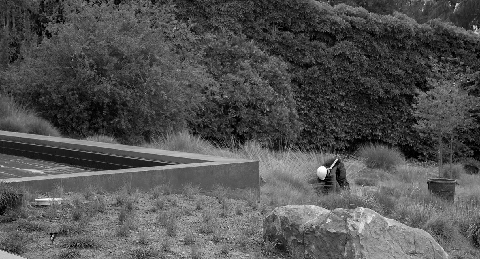 Chepe planting at black_IMG_0160_sm.jpg