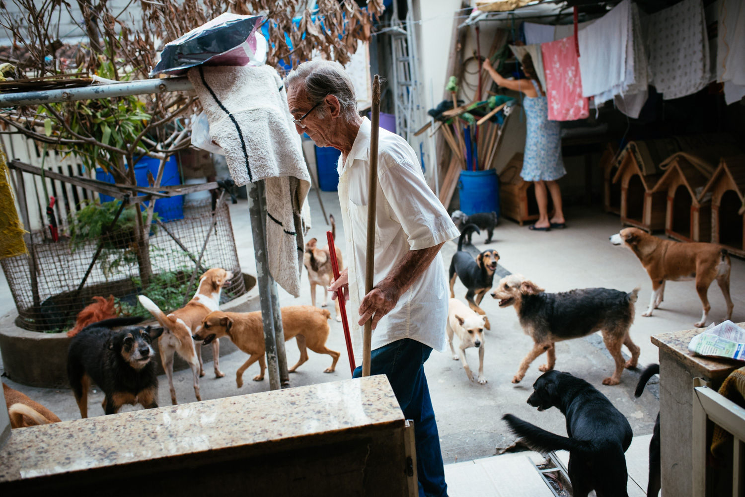 Euracy Aguiar Prado, 80 (center) with his wife Edina Ferreira Prado, 70, as they clean up after their dogs. They adopted their first two dogs 15 years ago. Ever since, Mrs. Prado slowly began adopting abandodned dogs from their neighborhood. Today they estimate thay have at least 100 dogs at home. Rio de Janeiro, Brazil, 03-15-2015