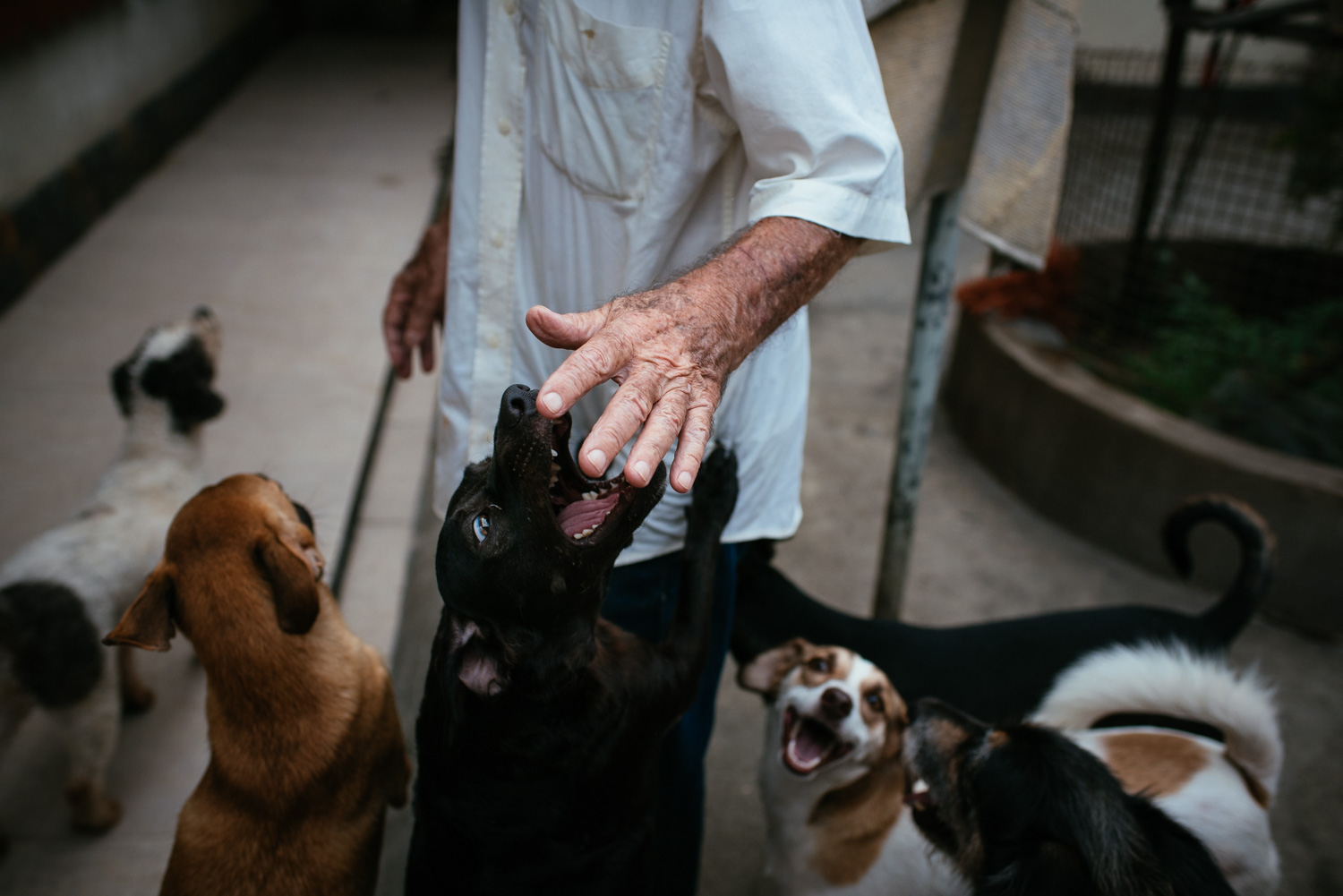 Euracy Aguiar Prado, 80, plays with some of his dogs in his backyard. Prado says they go through over 400 kg (880 lbs) of dog food per month. Rio de Janeiro, Brazil, 03-15-2015.