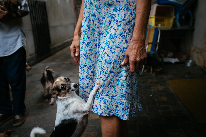 One of Edina Ferreira Prado's many dogs clamors for attention. Rio de Janeiro, Brazil, 03-16-2015.