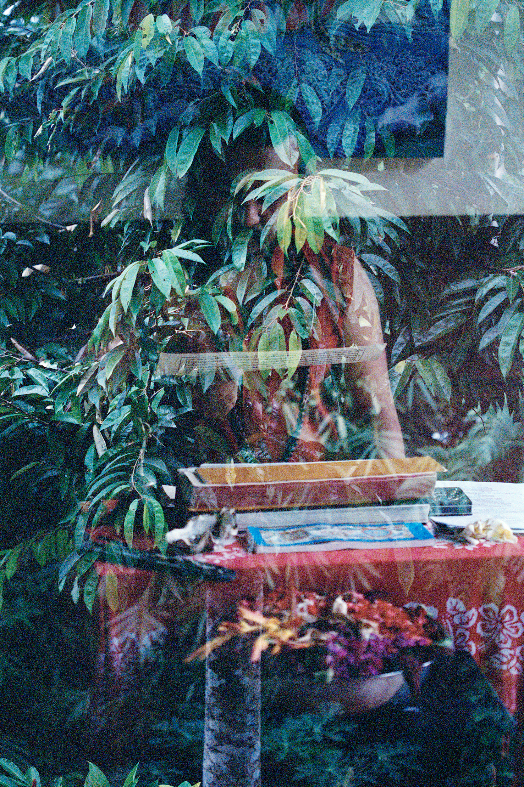 Roots Of Humanity, analogue double exposure, Ubud 2014