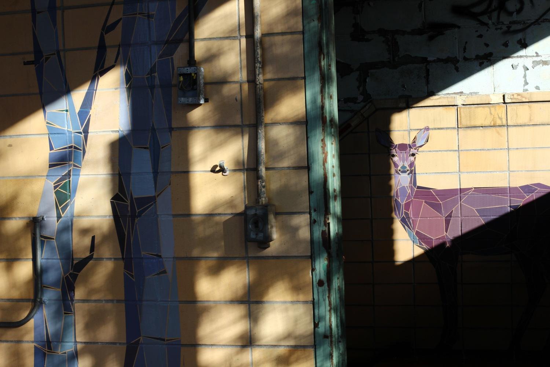 deer+shadows+copy.jpeg