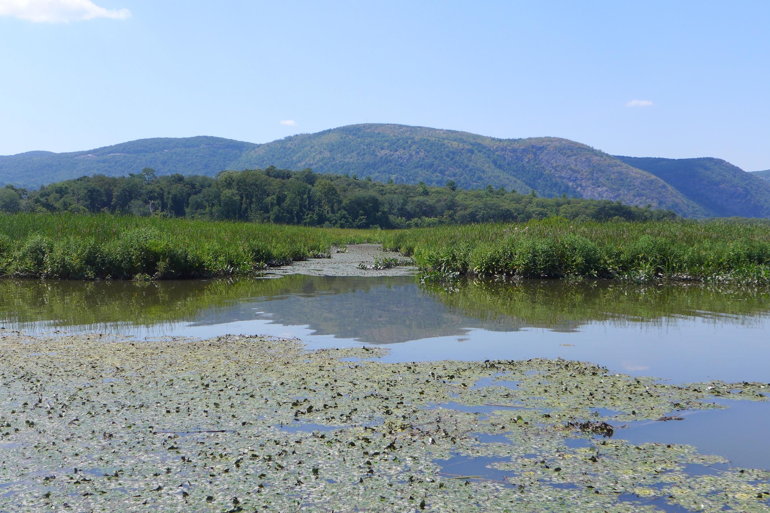 audubon-marsh-garrison-west.jpg