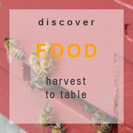 journey_food.jpg