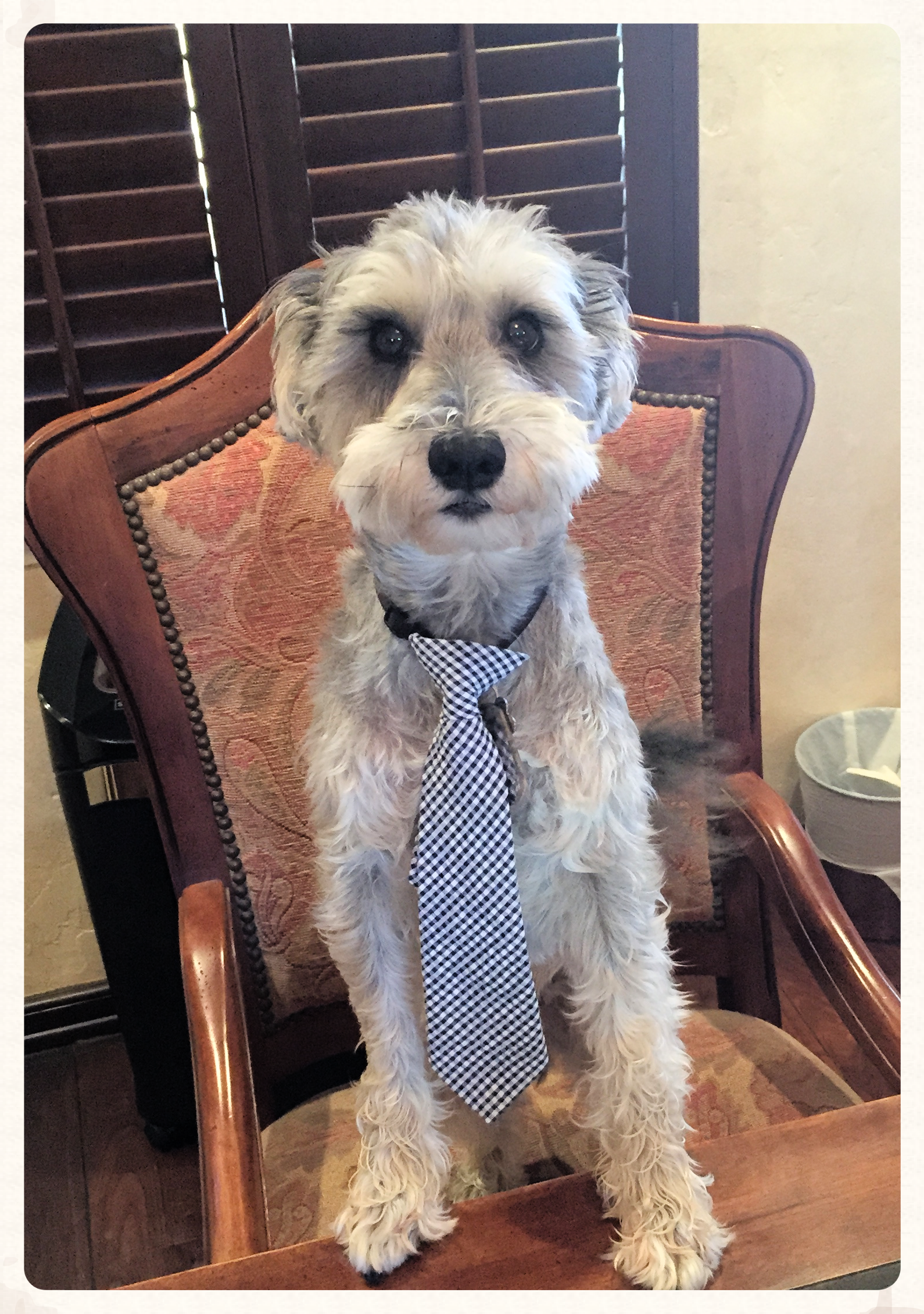 Professor Dog provides inspiration for Greendot Bank's effort to create financial products that serve and safeguard consumers' financial lives.