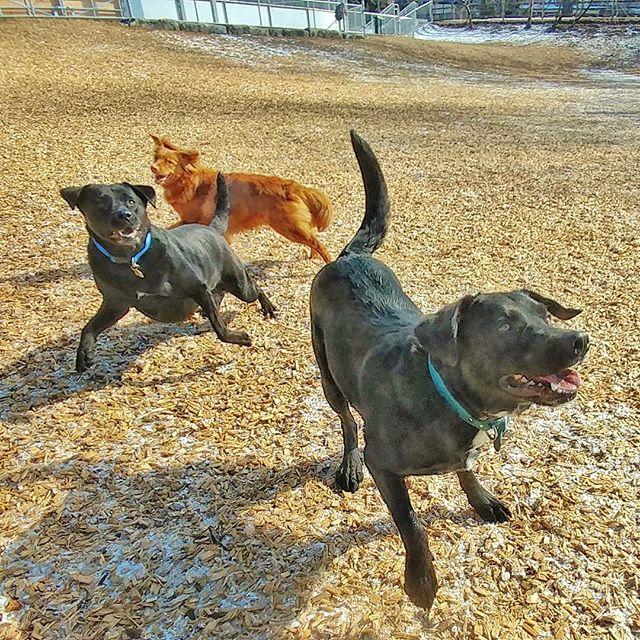 Excited spring is here! #delight_pets  #dogsofinstagram  #funpetloveclub  #dogscorner  #dogdailyfeaturesss  #inspiredbypets  #thebeaches #petbox  #dogsandpals  #torontolife #dogs  #petstagram  #instadog  #petsagram  #doglover  #dogs_of_instagram  #instagramdogs  #dogoftheday  #instapuppy  #dogstagram  #torontodogwalker  #blacklab #novascotiaducktoller