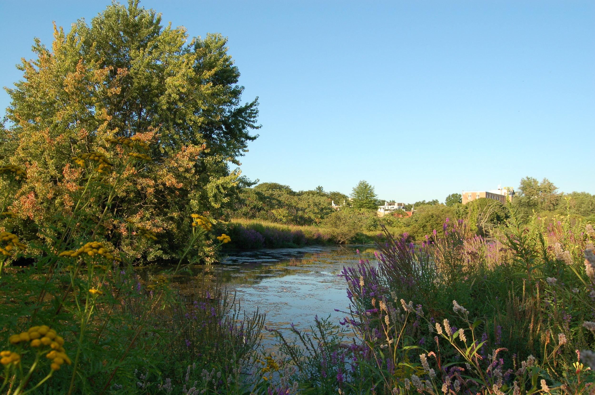 Broad Brook Meadow