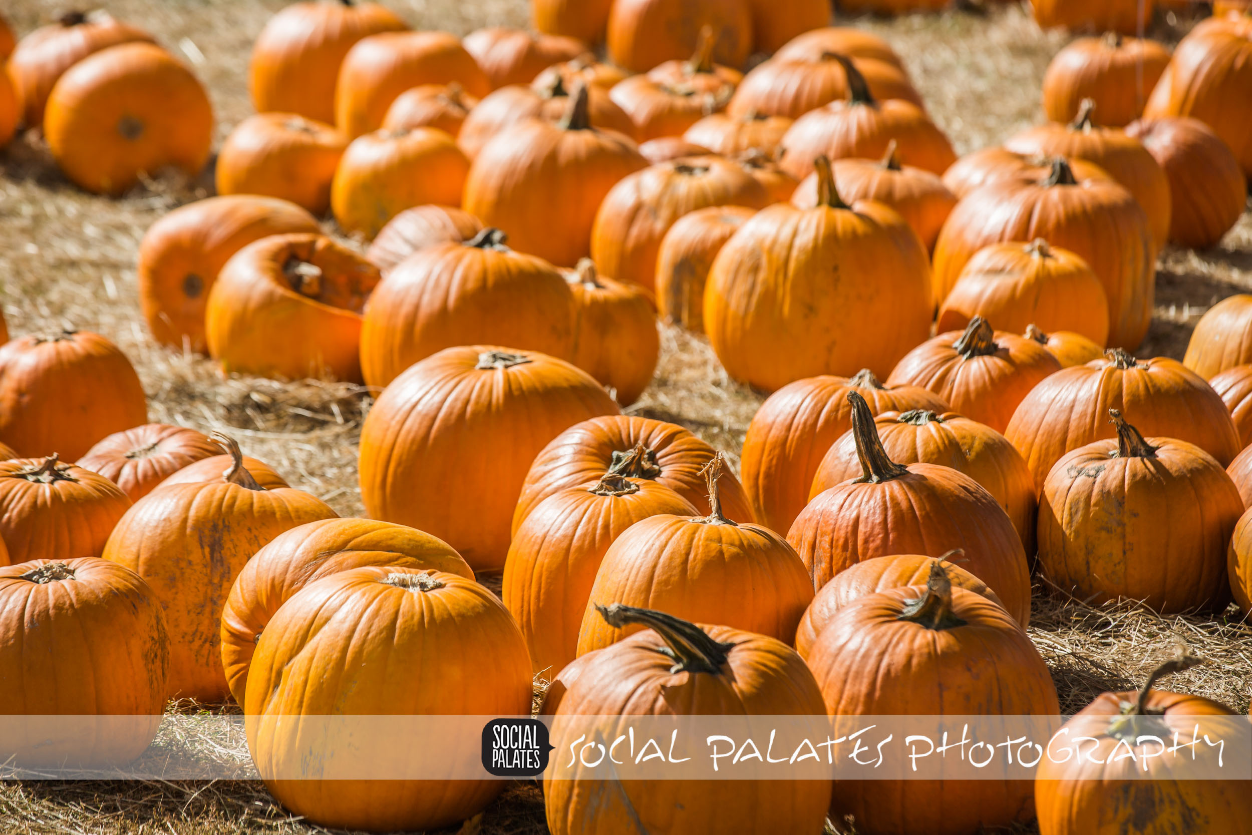 Salem_Farmers_Market_2014-1-4.jpg