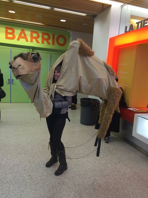 Sharon camel.jpg