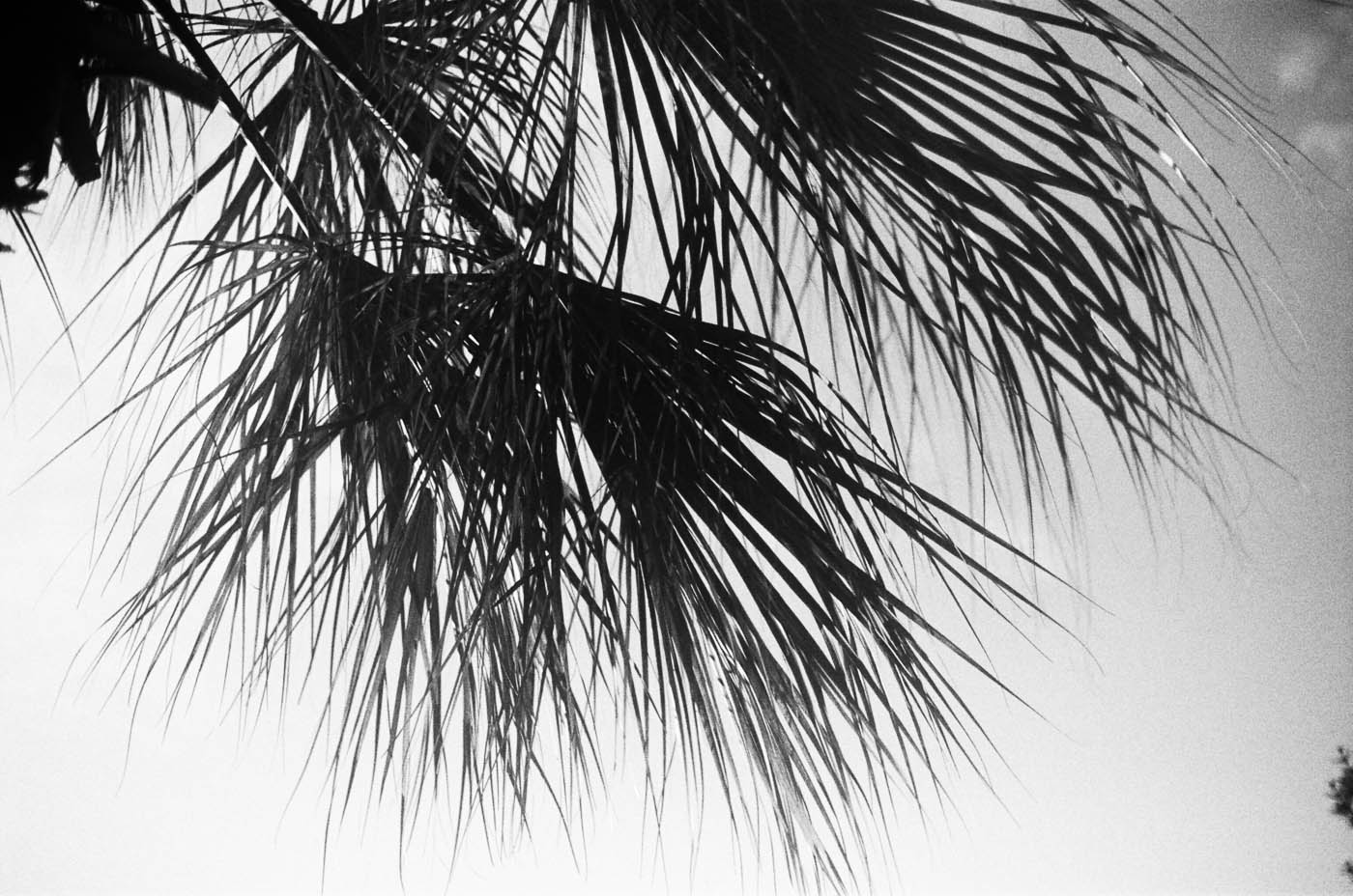 black and white film beach photographer our 30a ©2015abigailbobophotography-5.jpg